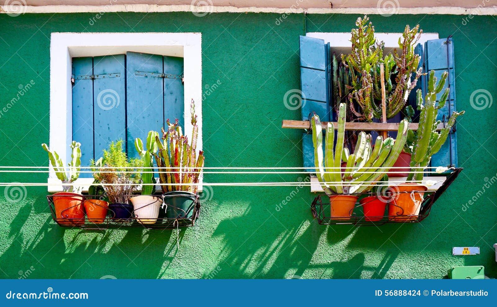 Finestra blu sulla parete verde con il cactus