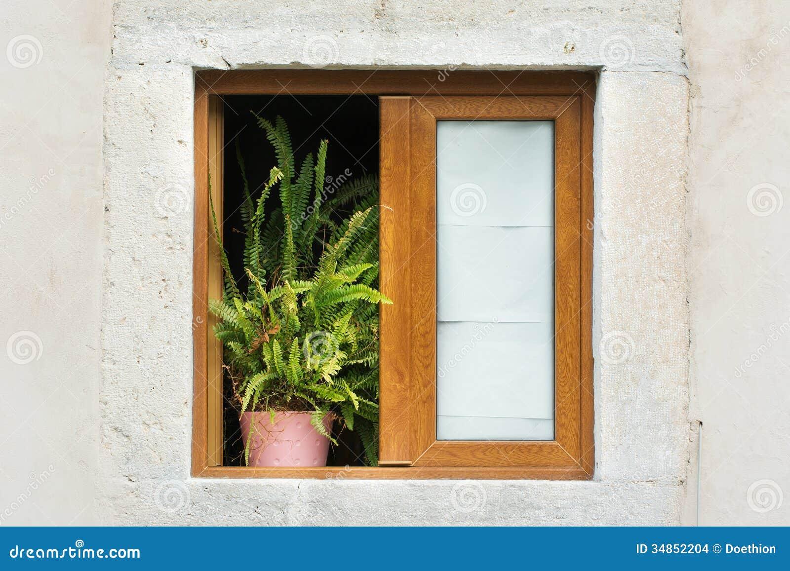 Finestra incorniciata di legno con la pianta in vaso