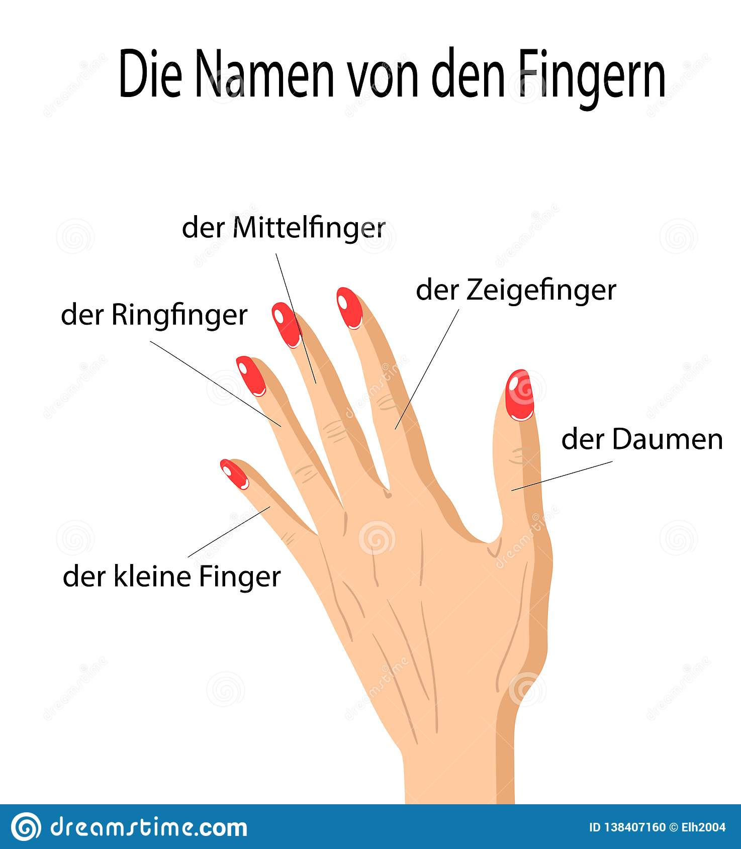 Fingers Names Of Human Body Parts In German Language Vector
