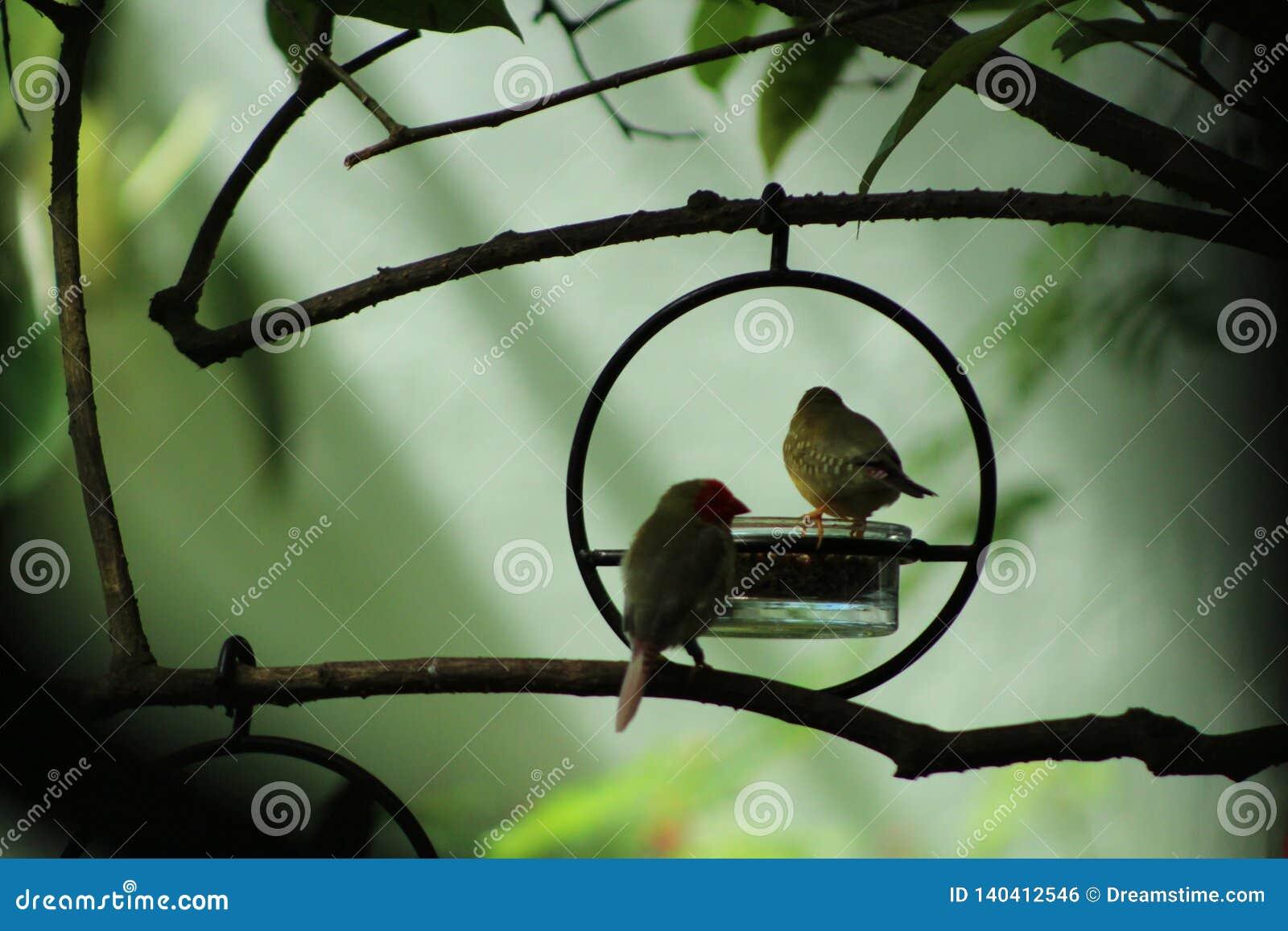 Finkar i en älvornas riketrädgård