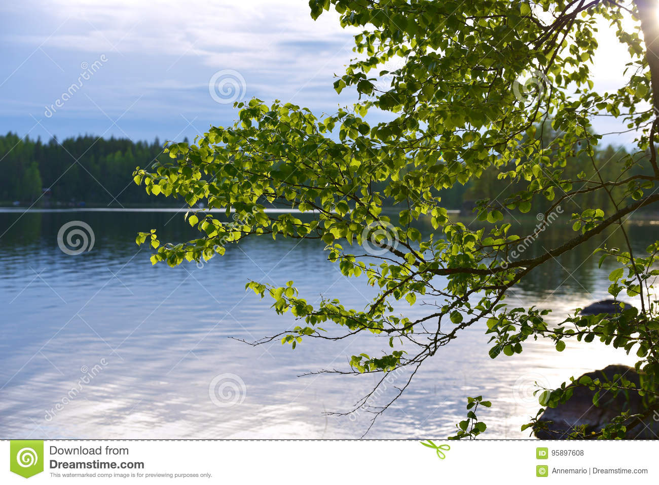 Download Finland stock photo. Image of camping, pine, green, leaf - 95897608