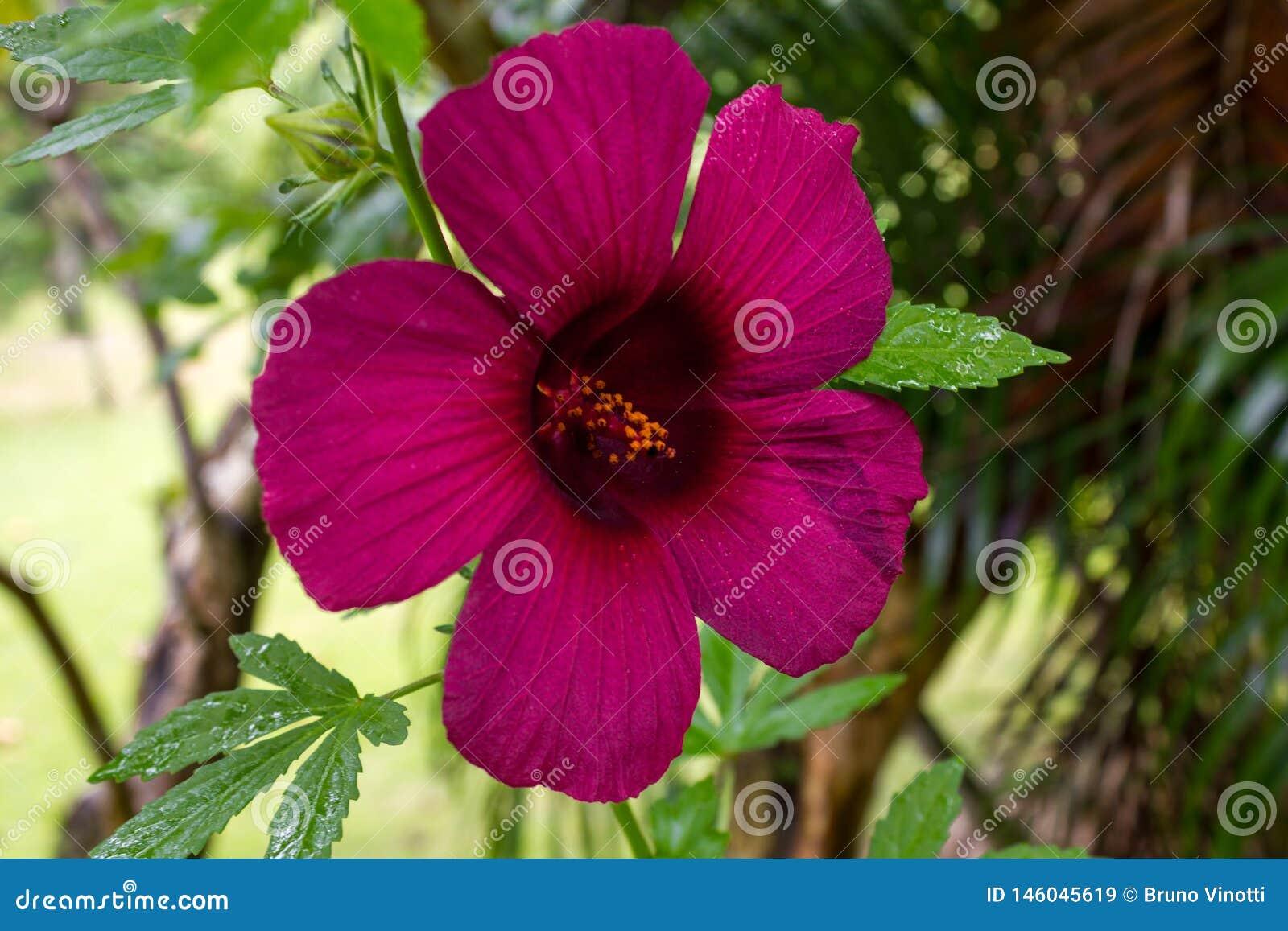 Fiołkowy kwiat wewnątrz