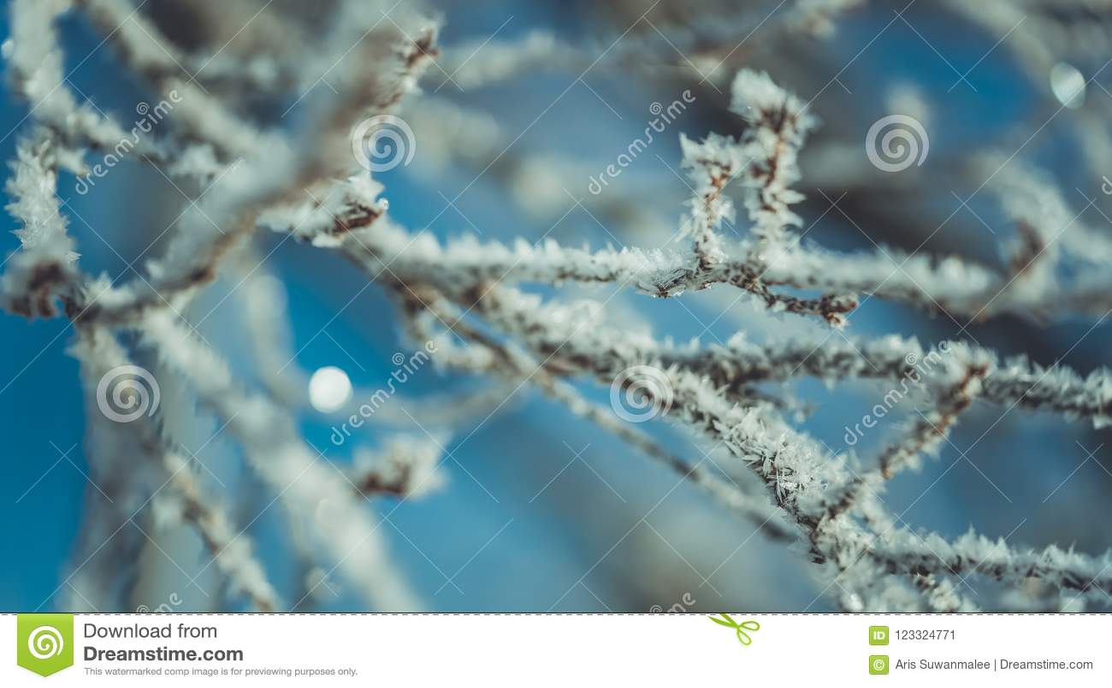 Fiocco Di Neve Bianco Sul Ramo Di Albero Immagine Stock Immagine