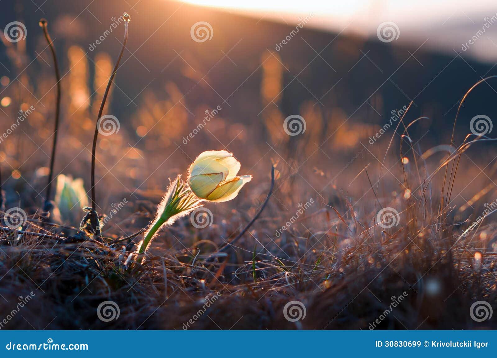 Fiore al tramonto