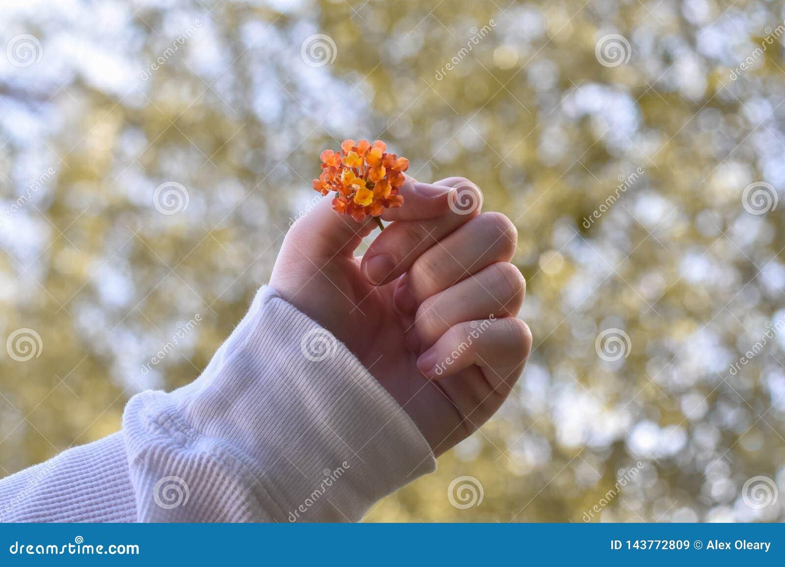 Fiore arancio che è tenuto davanti alle foglie vaghe
