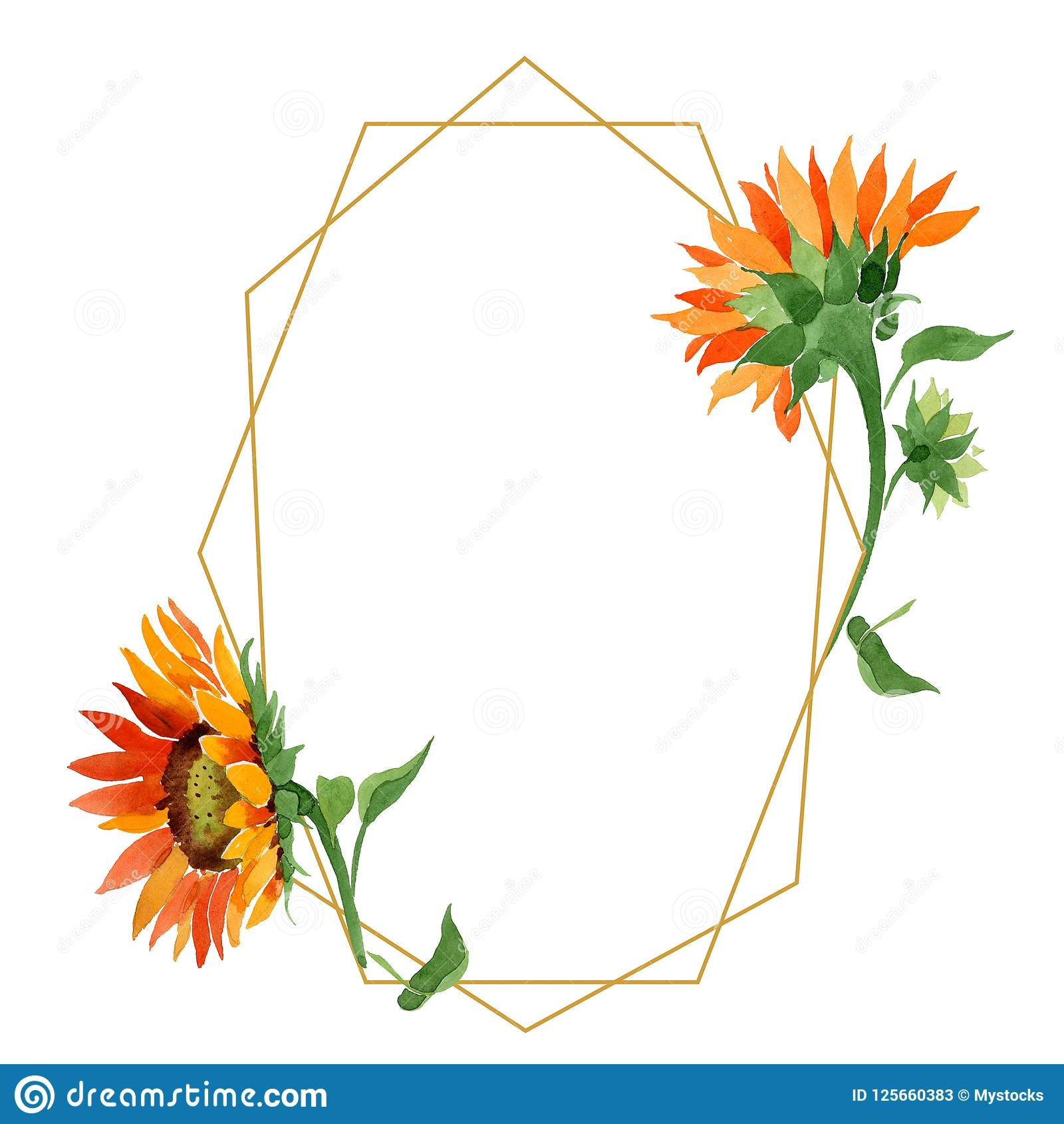 Fiore arancio del girasole dell acquerello Fiore botanico floreale Quadrato dell ornamento del confine della pagina