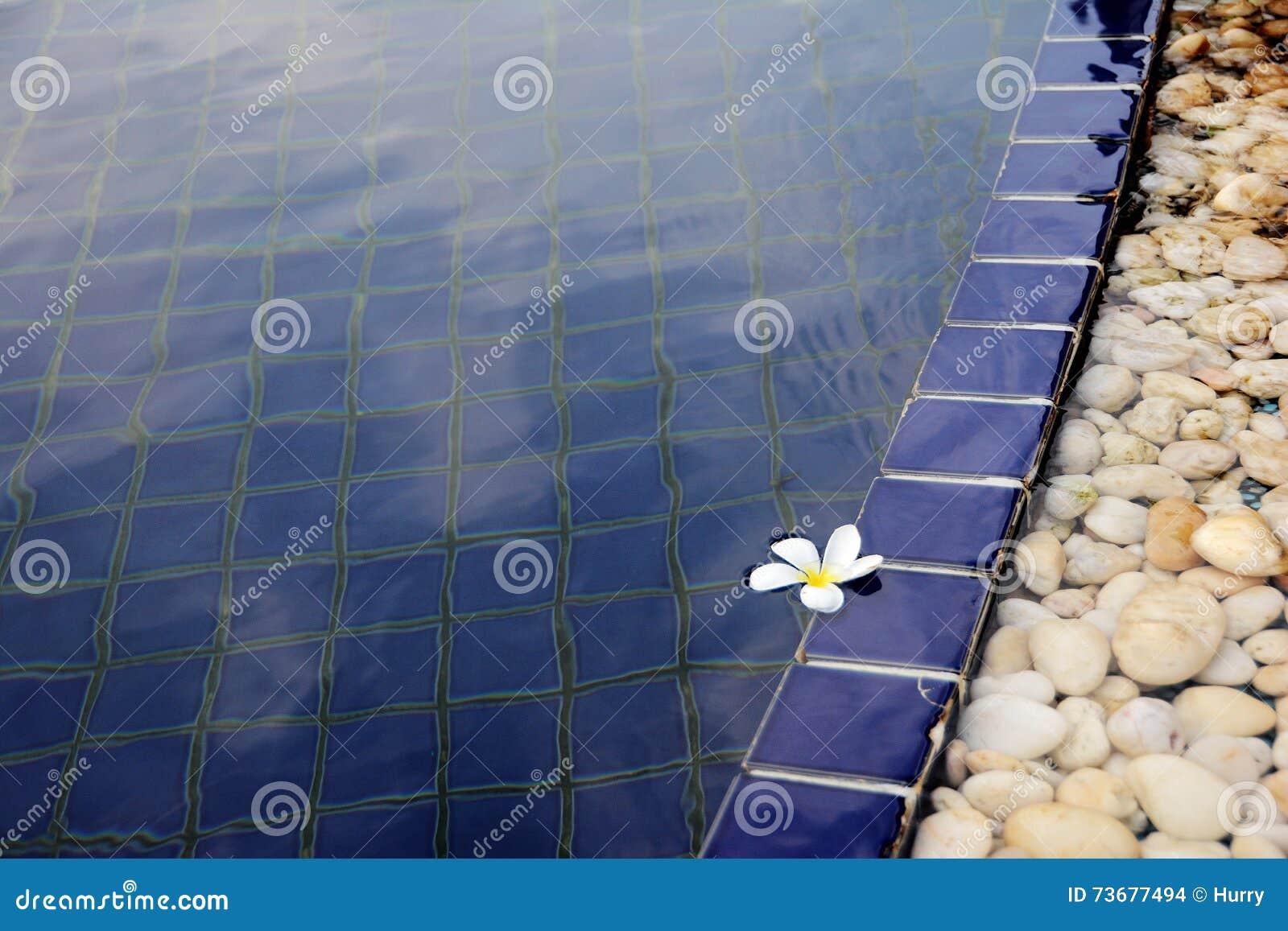 Fiore bianco che galleggia nella piscina