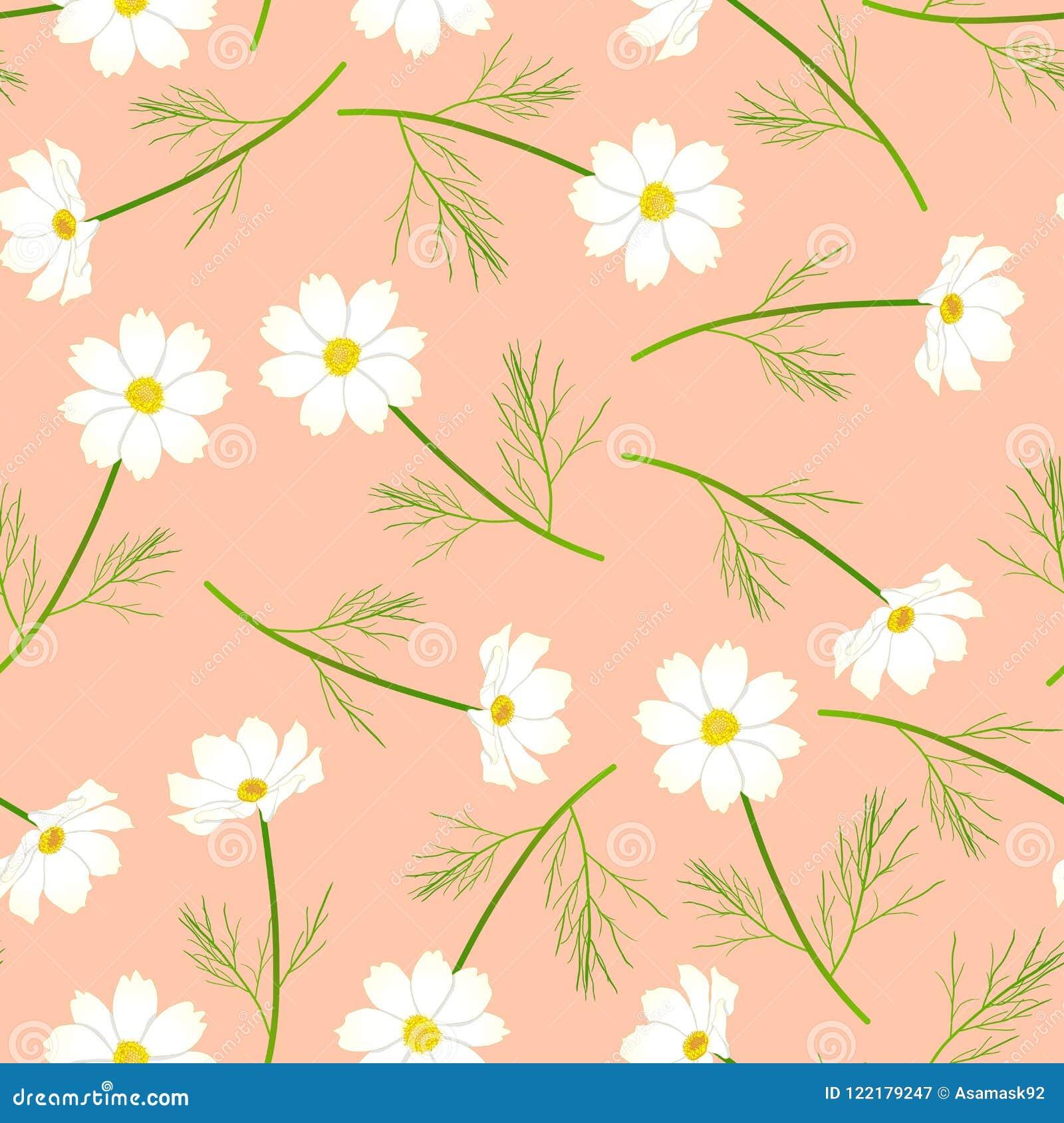 Fiore bianco dell universo su Salmon Background rosa Illustrazione di vettore