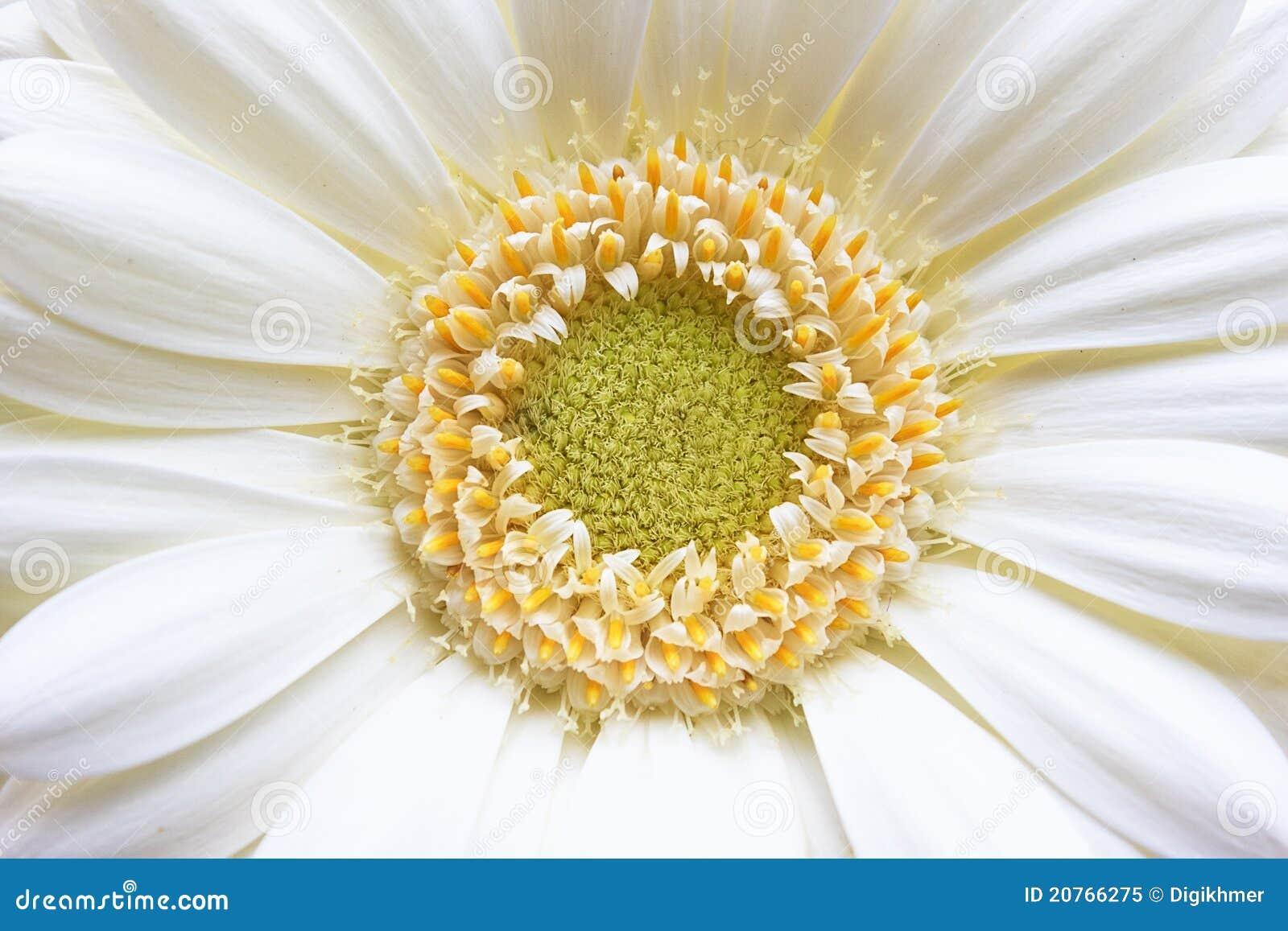 Fiore bianco giallo