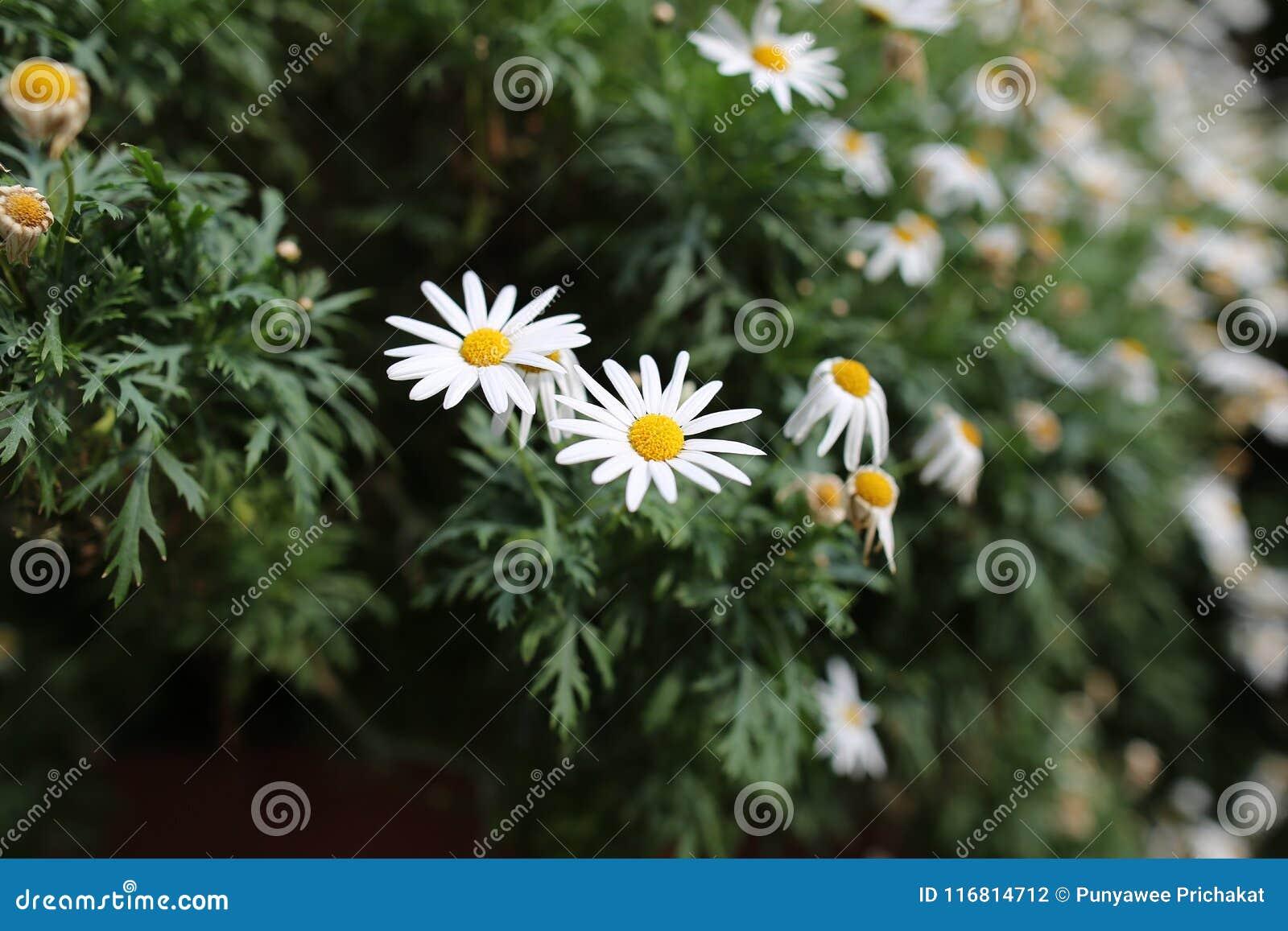 Fiore bianco non da solo
