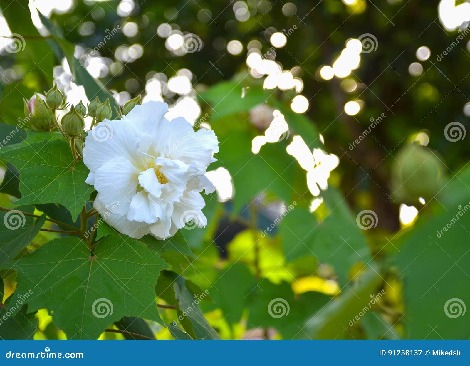 Fiore Bianco Su Sfondo Naturale Verde Immagine Stock Immagine Di