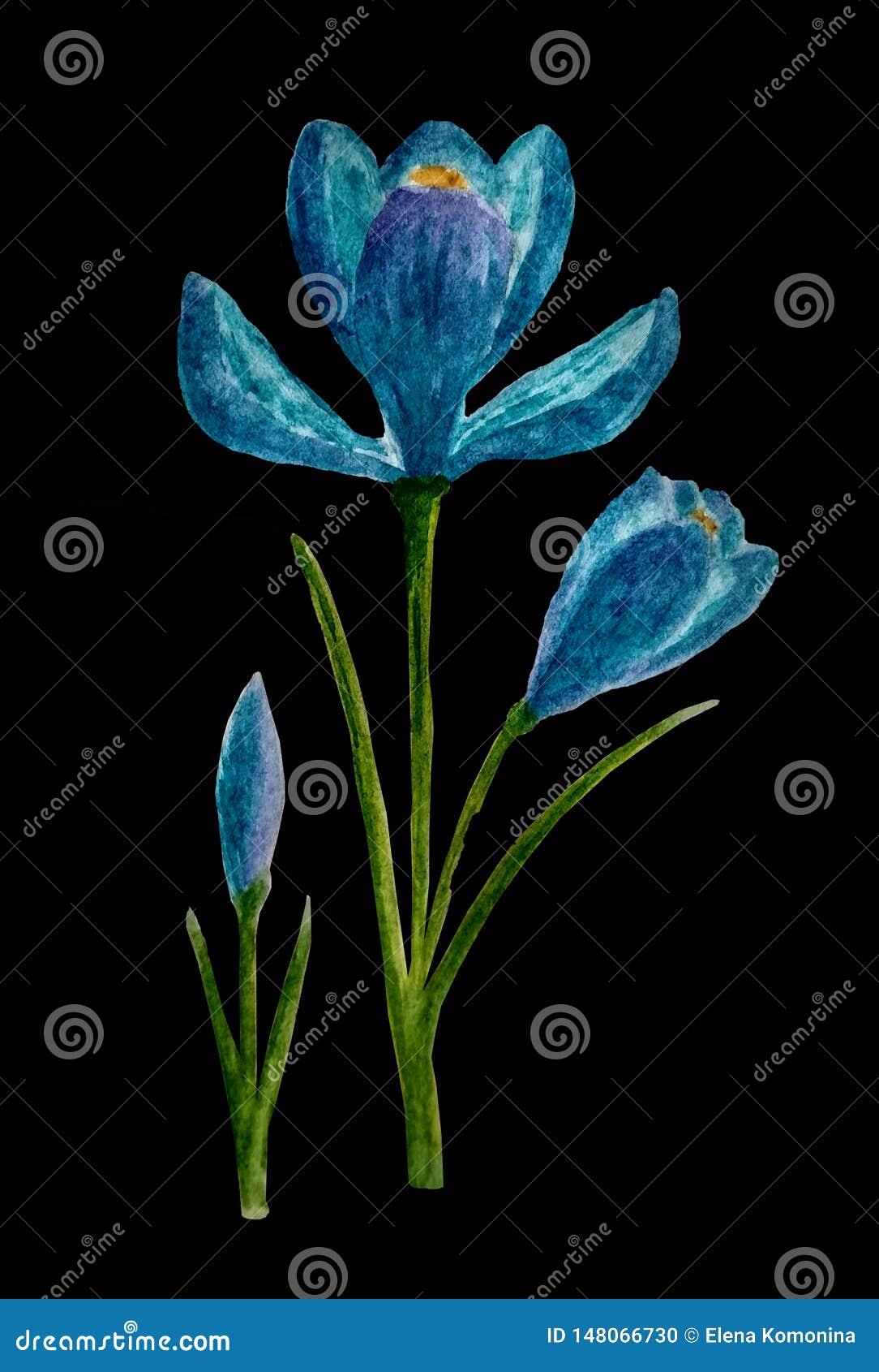 Fiore blu del croco Assorbito uno stile di lerciume