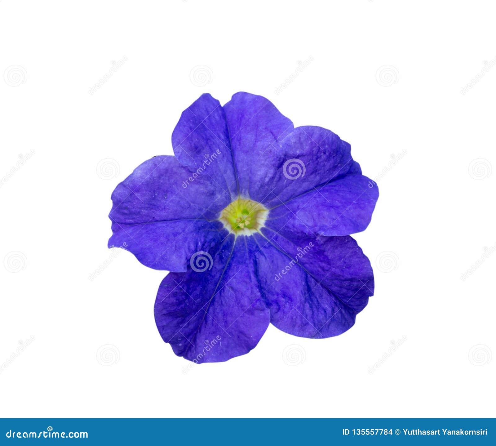 Fiore blu su una priorità bassa bianca