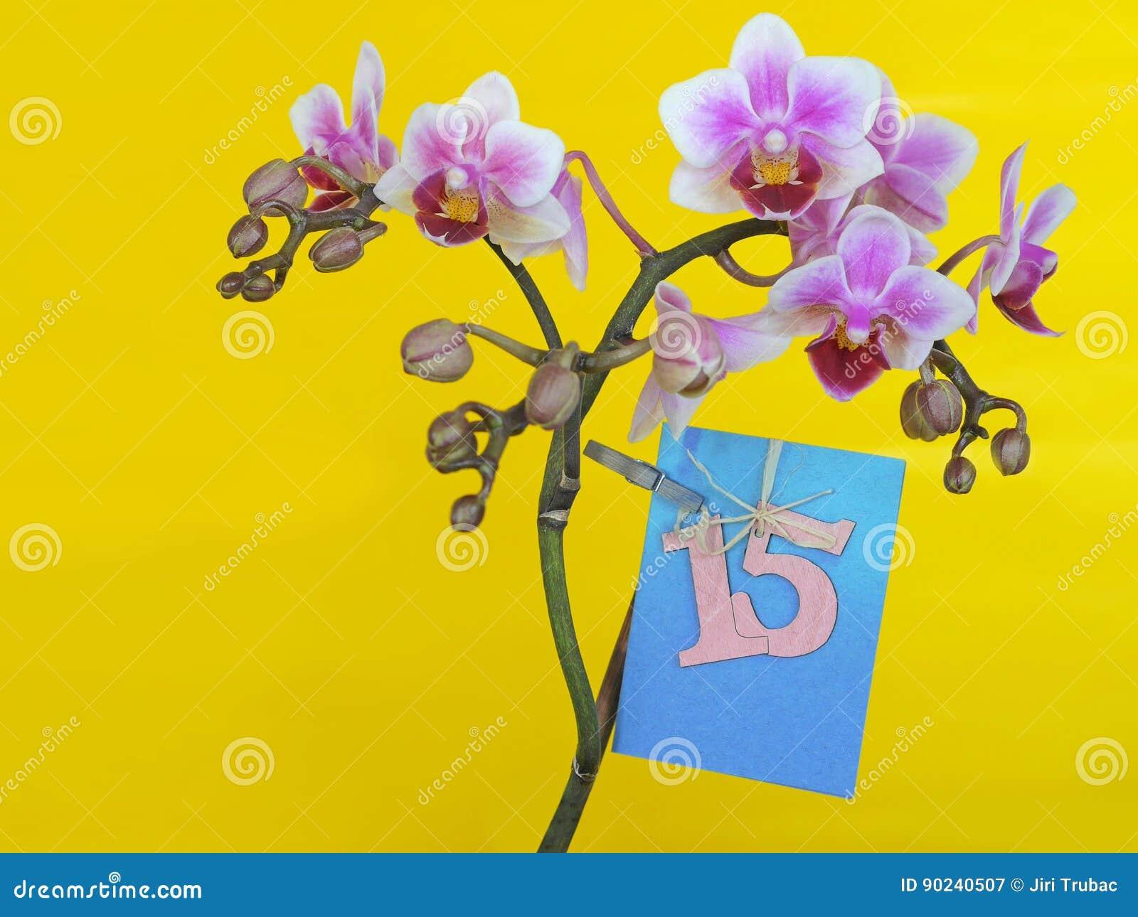Fiori Con La C.Fiore Con Dedica Feste Della Carta Di Buon Compleanno Che