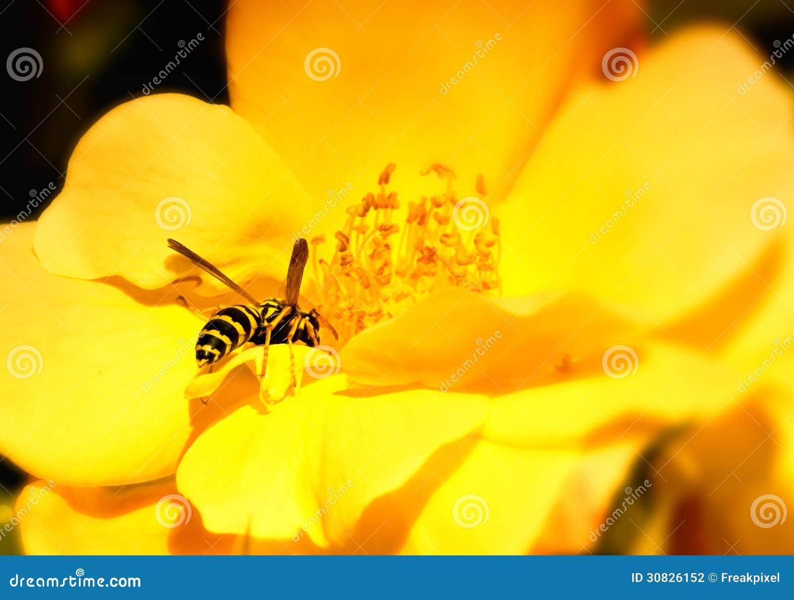 Fiore d impollinazione dell ape