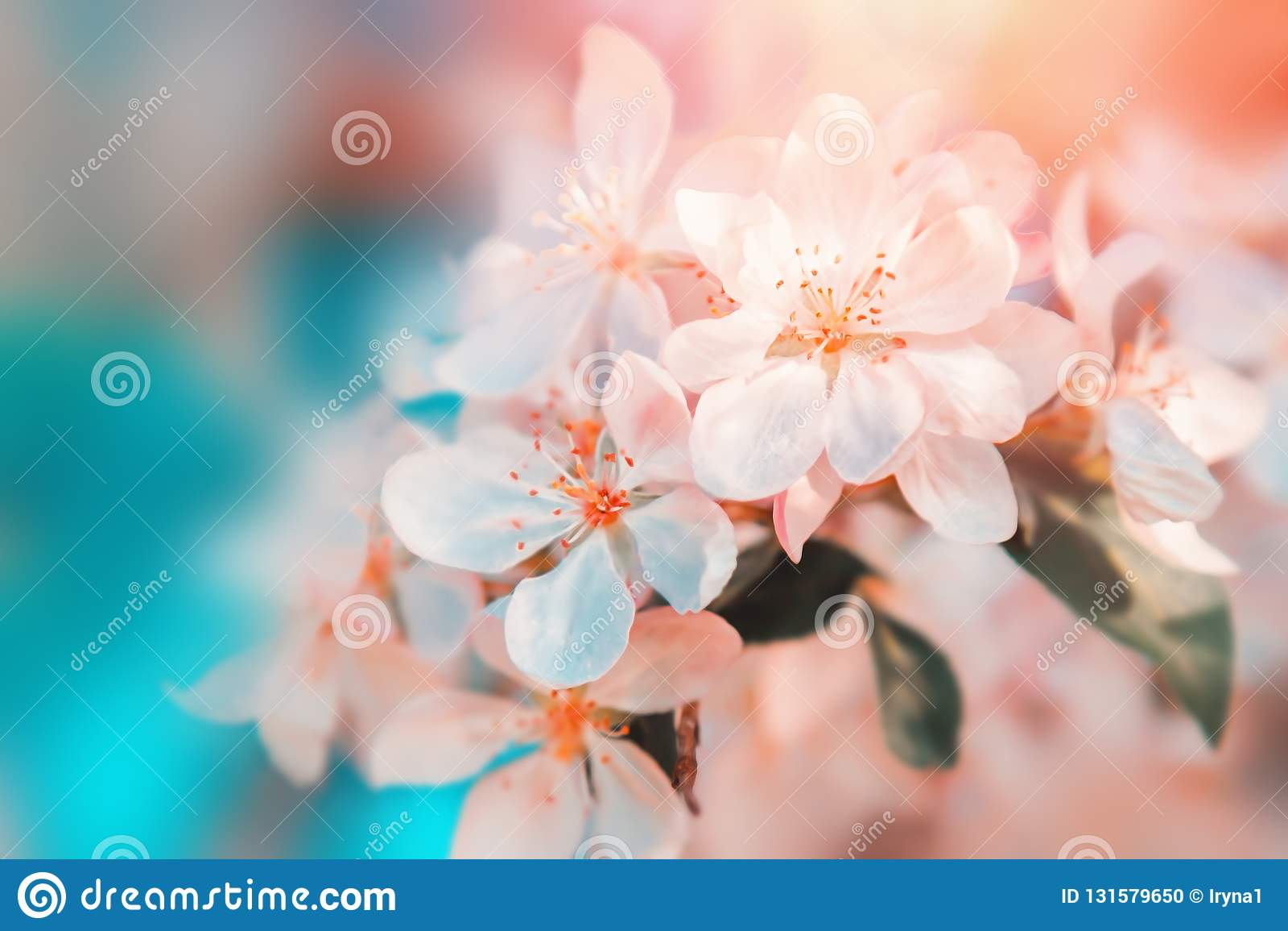 Fiore dei fiori bianchi Bello fondo floreale del fondo… con i fiori variopinti