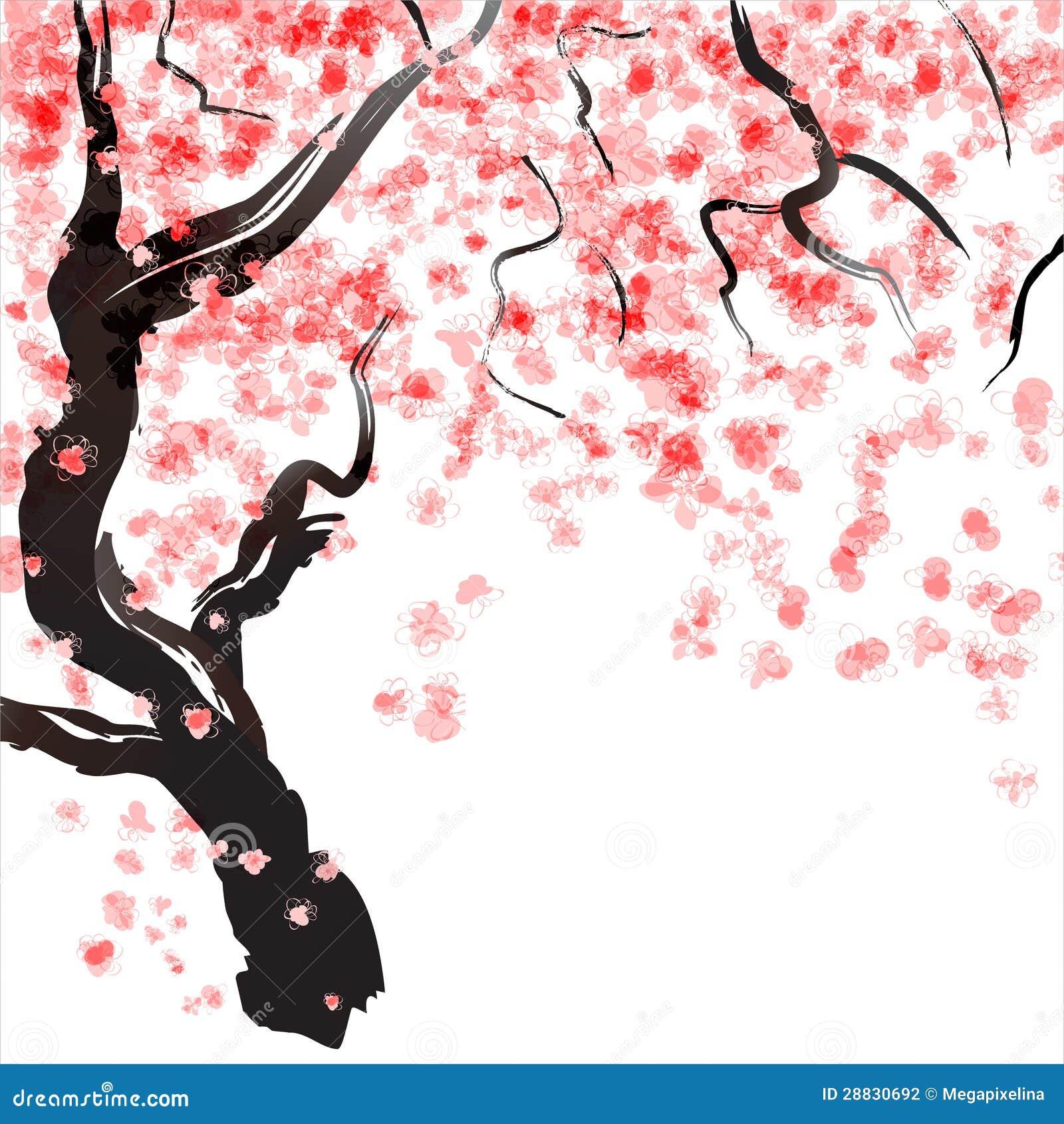 Fiore del ciliegio