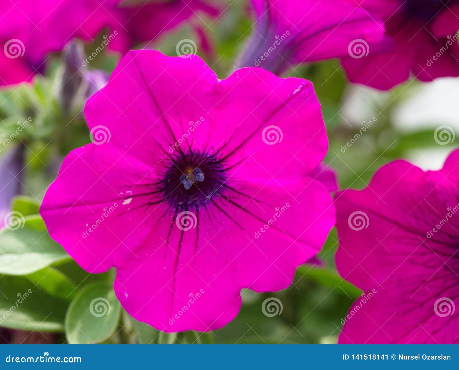 Fiore del giardino di Patricia