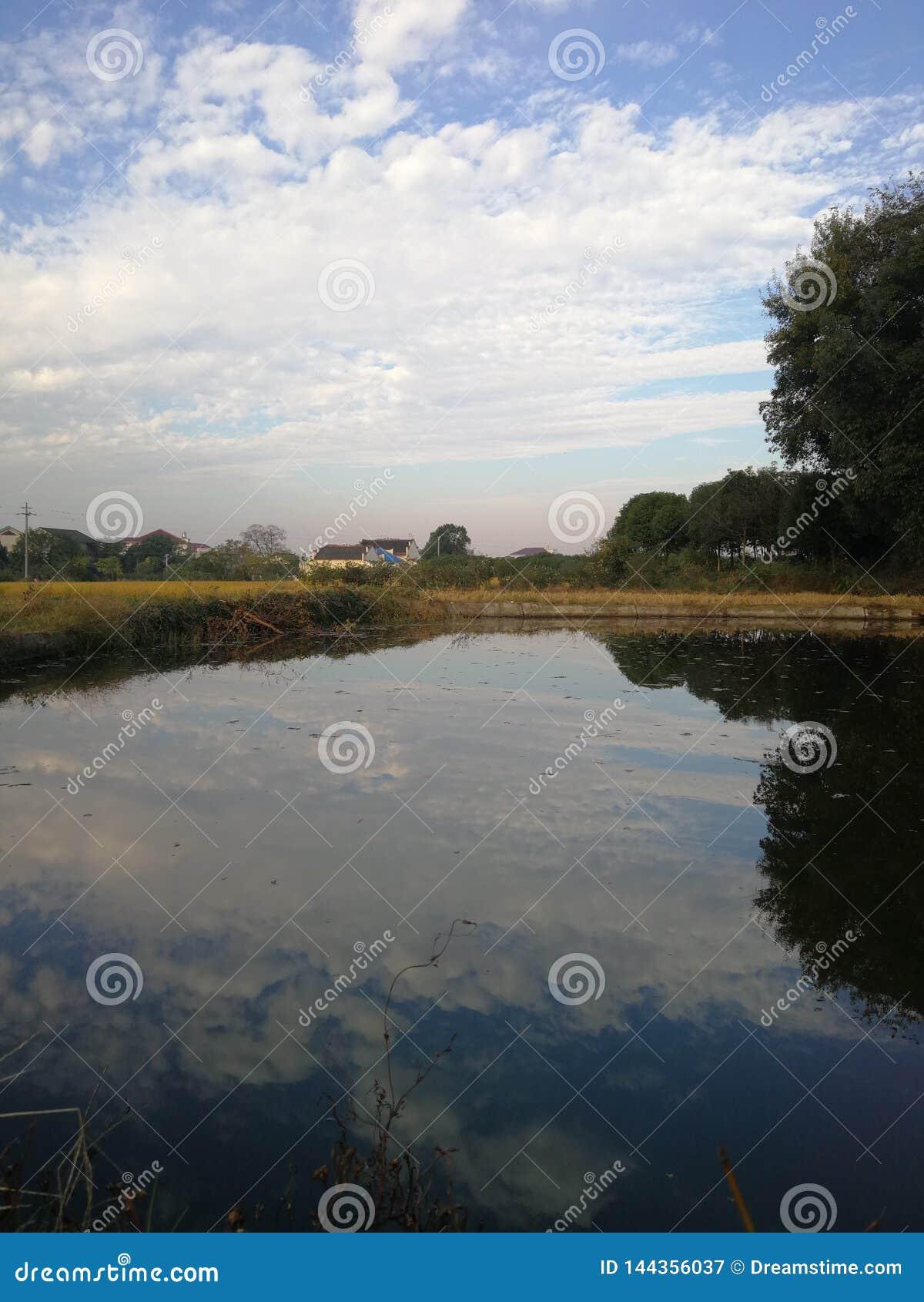 Fiore dell acqua con effetto dello specchio