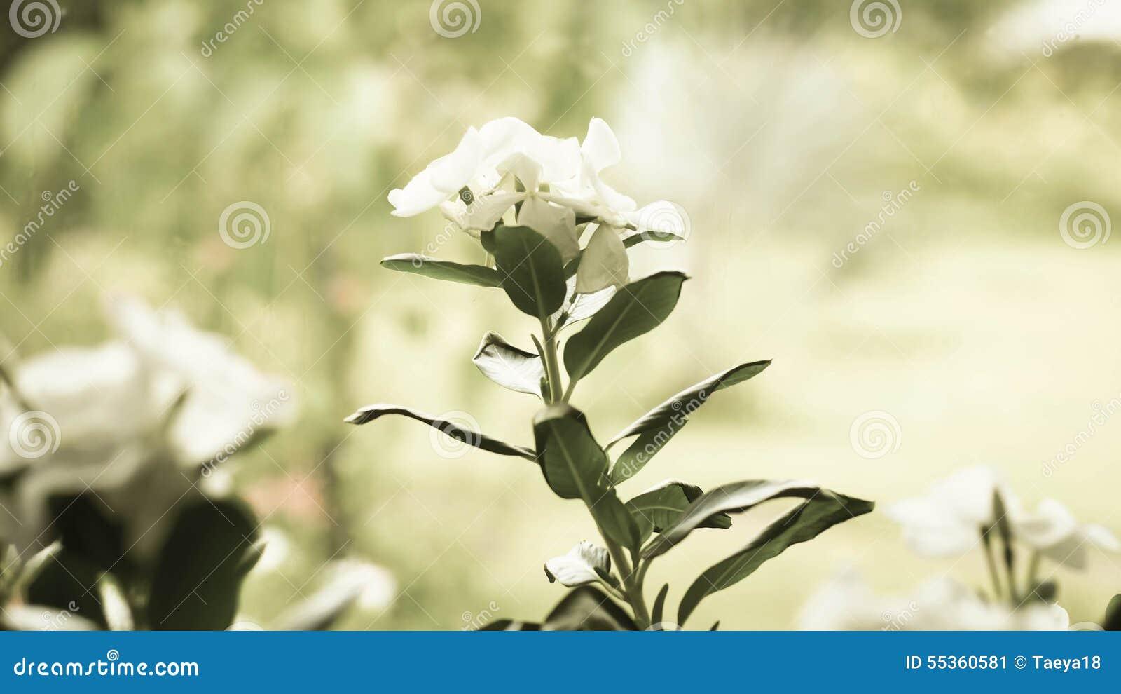 Fiore dell annata