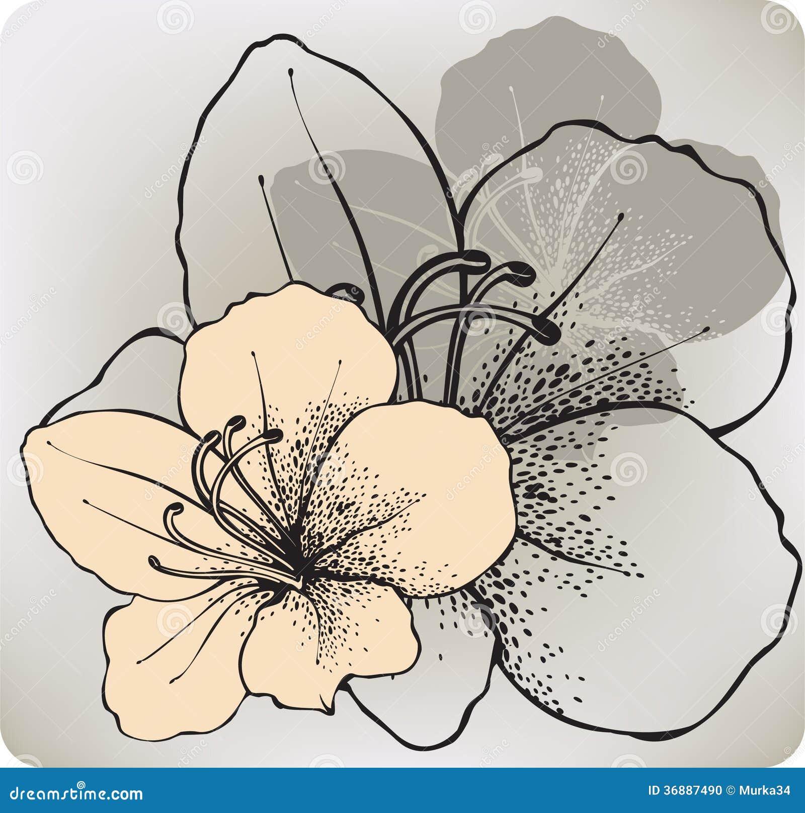 Download Fiore Dell'ibisco, A Mano Disegno Illustrazione Di Vettore Illustrazione Vettoriale - Illustrazione di regalo, saluto: 36887490
