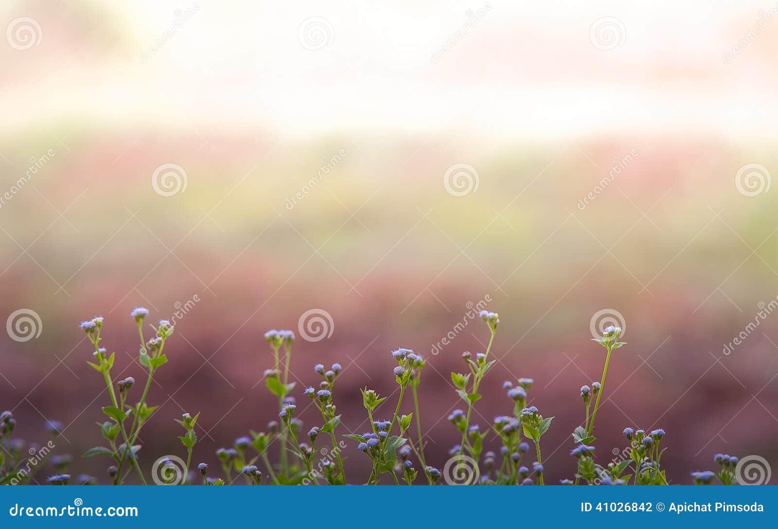 Fiore dell infield del mezzo dell erba