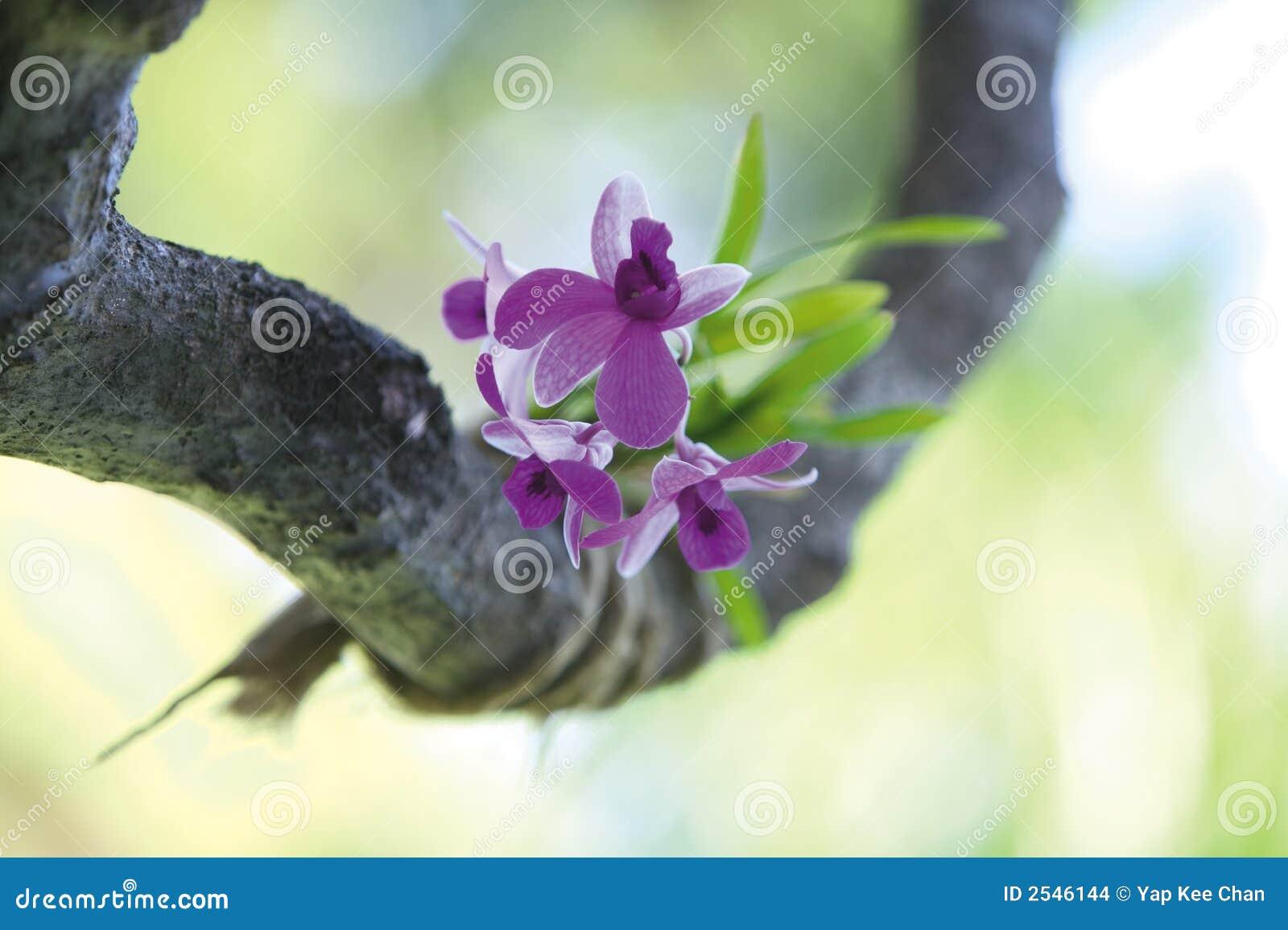 Fiore dell orchidea