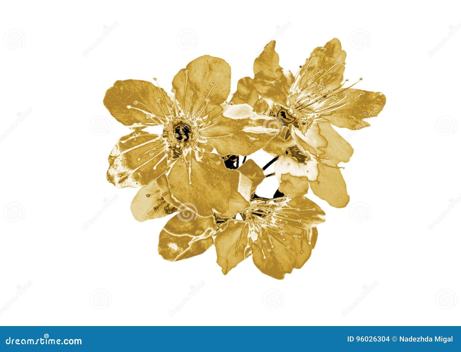 Fiore dell oro