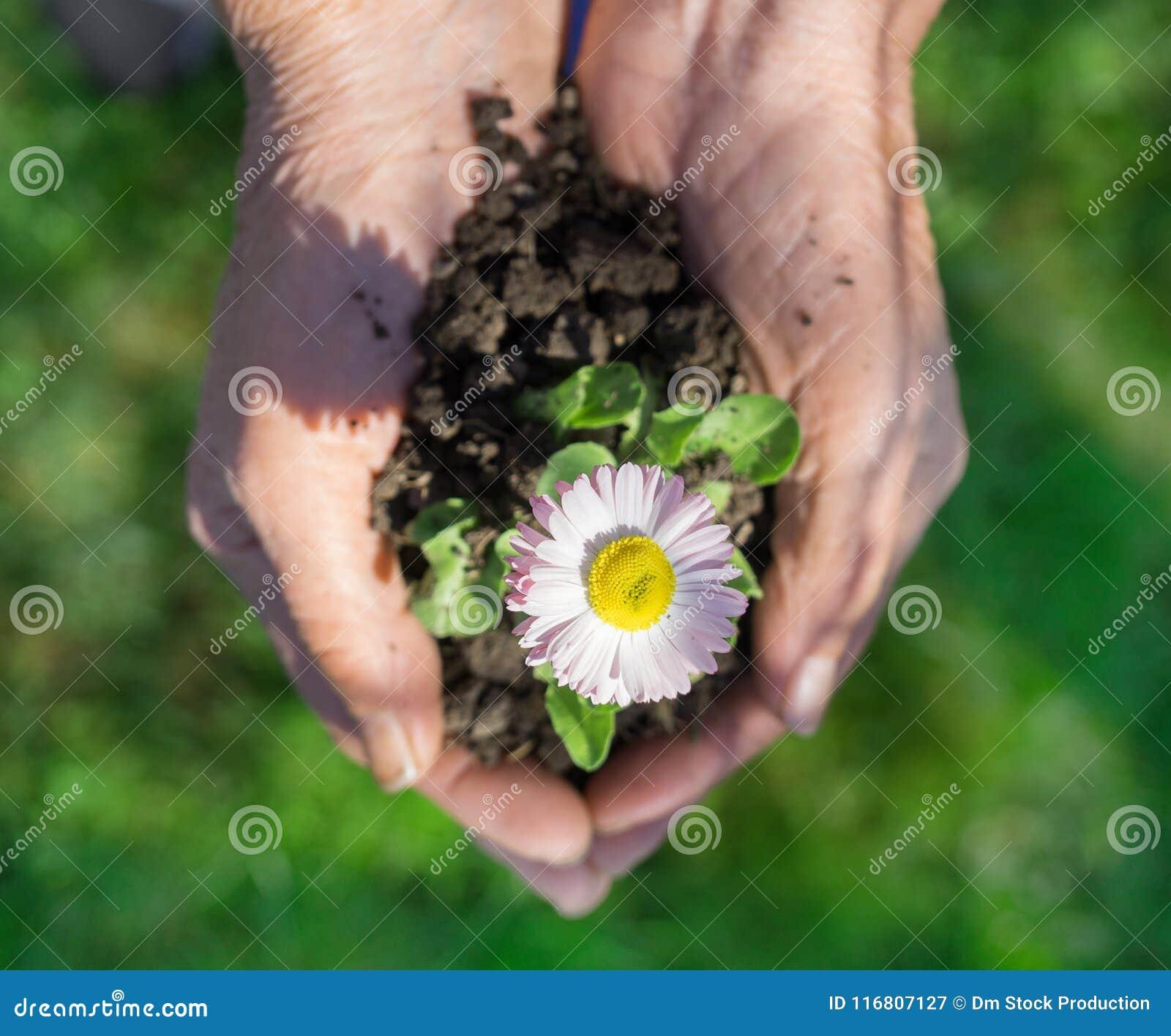 Fiore della holding della giovane donna
