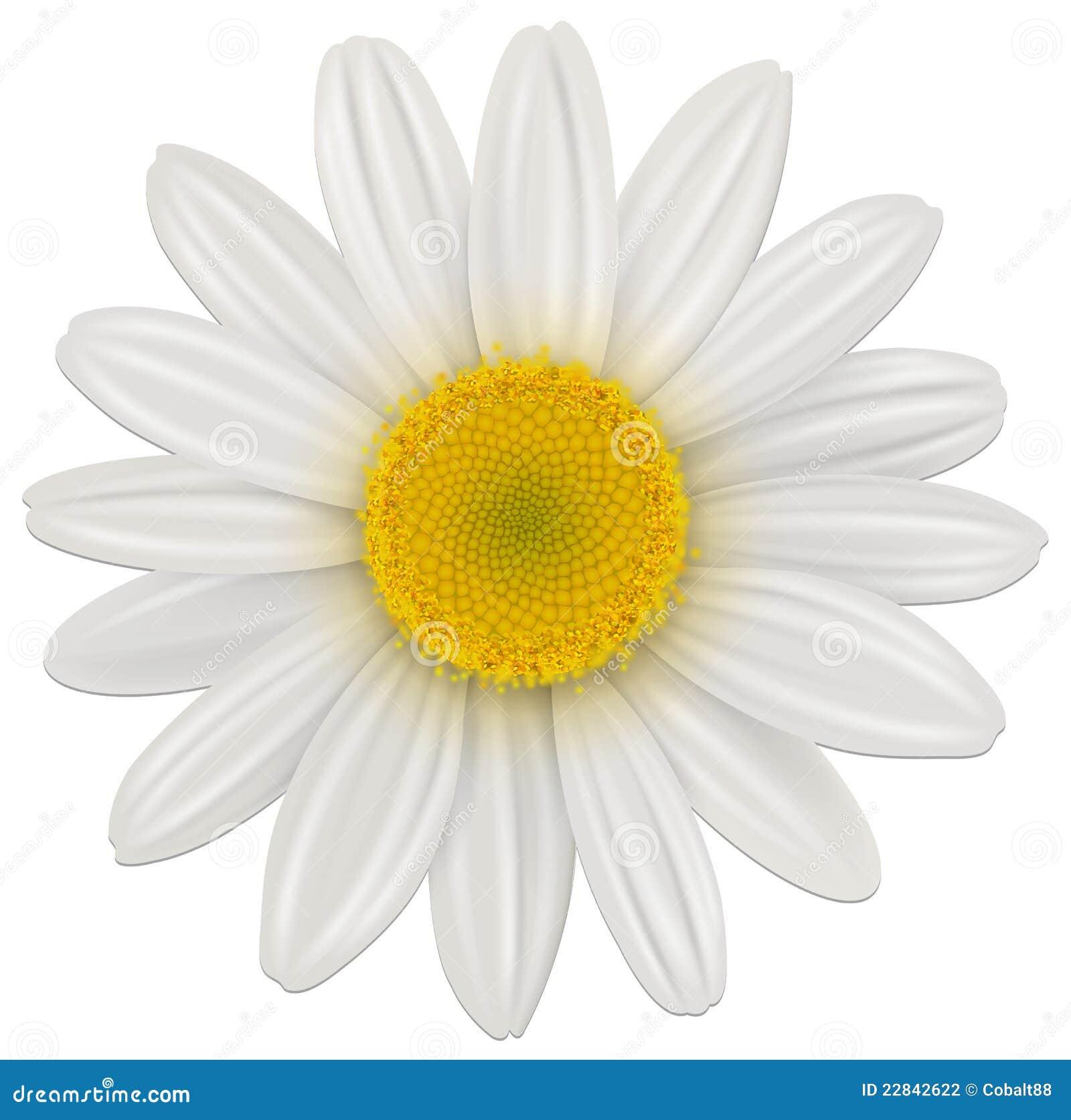 Fiore della margherita