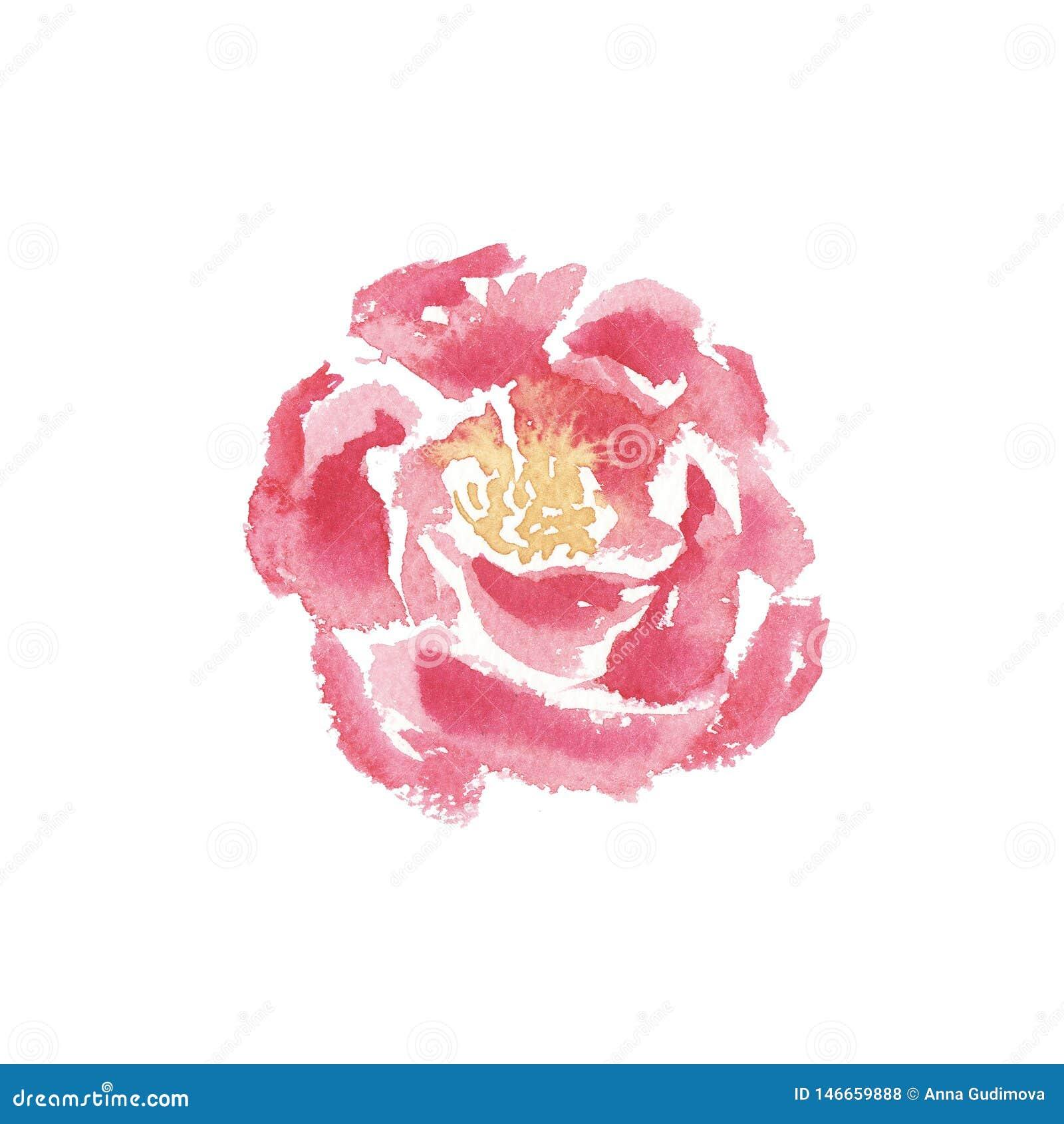 Fiore della peonia isolato acquerello disegnato a mano