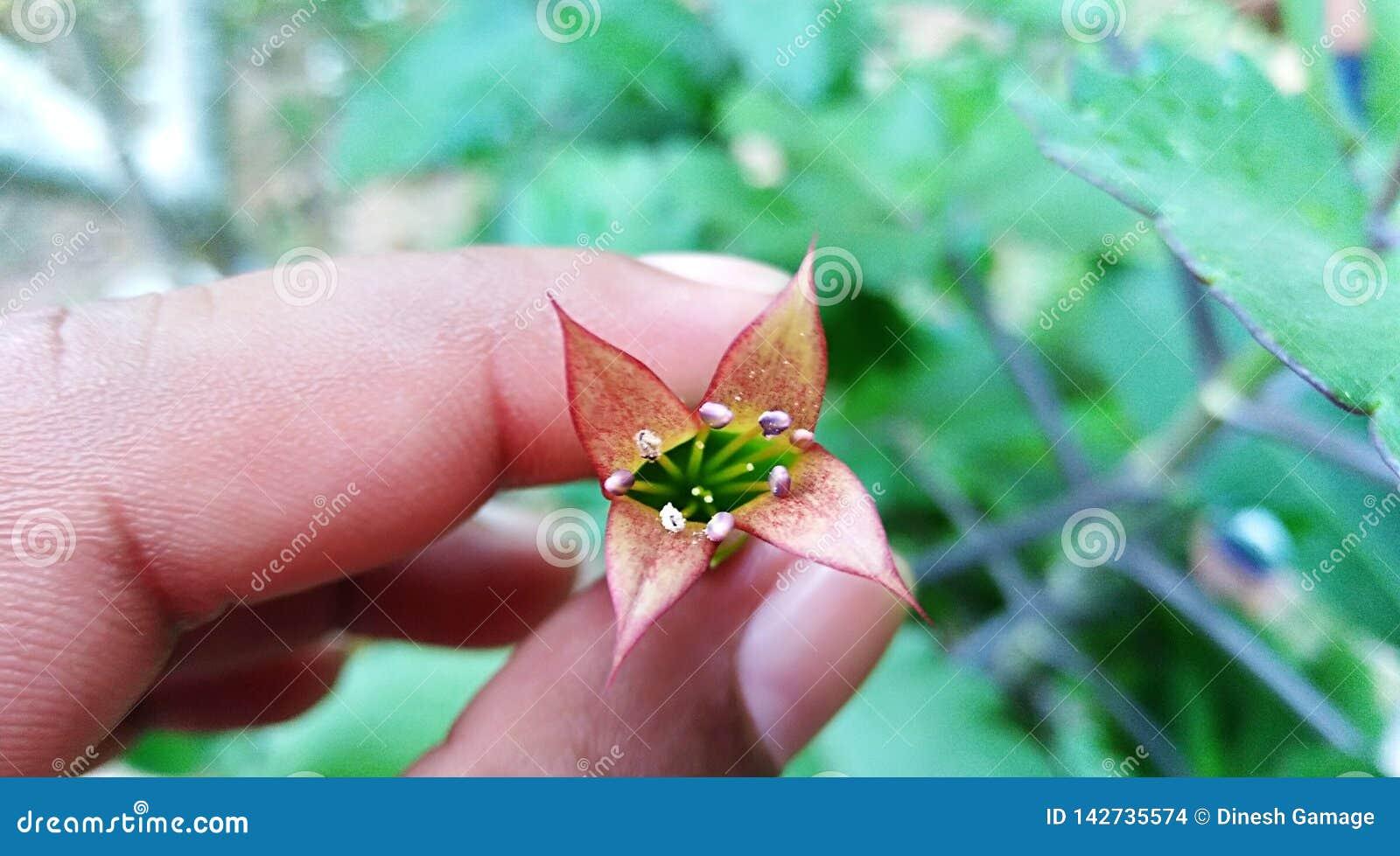 Fiore della pianta delle campane della cattedrale