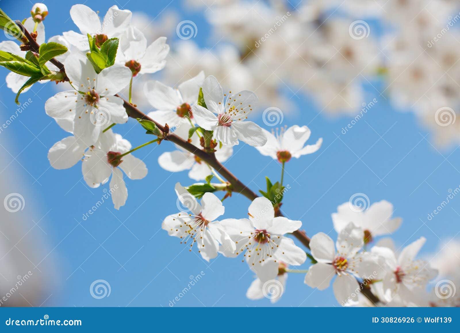Fiore della primavera