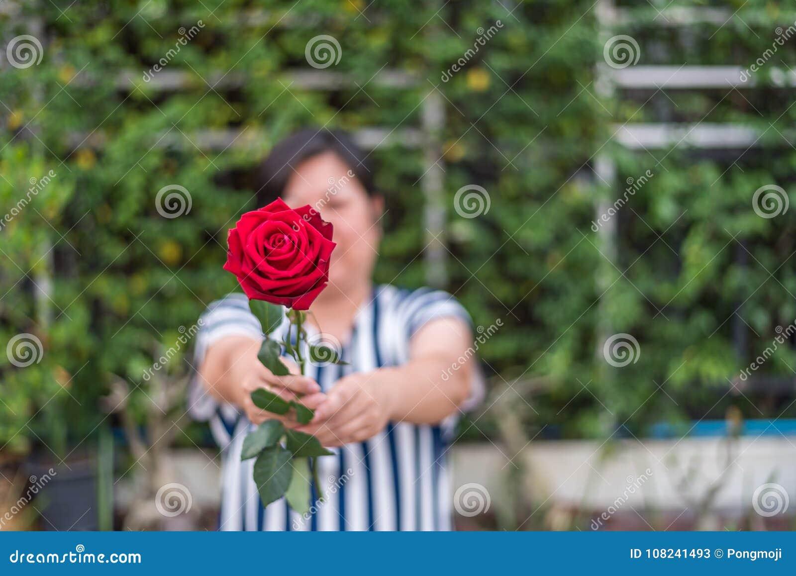 Fiori Con La S.Fiore Della Rosa Rossa Con La Mano Umana Nel Giorno Del S Del