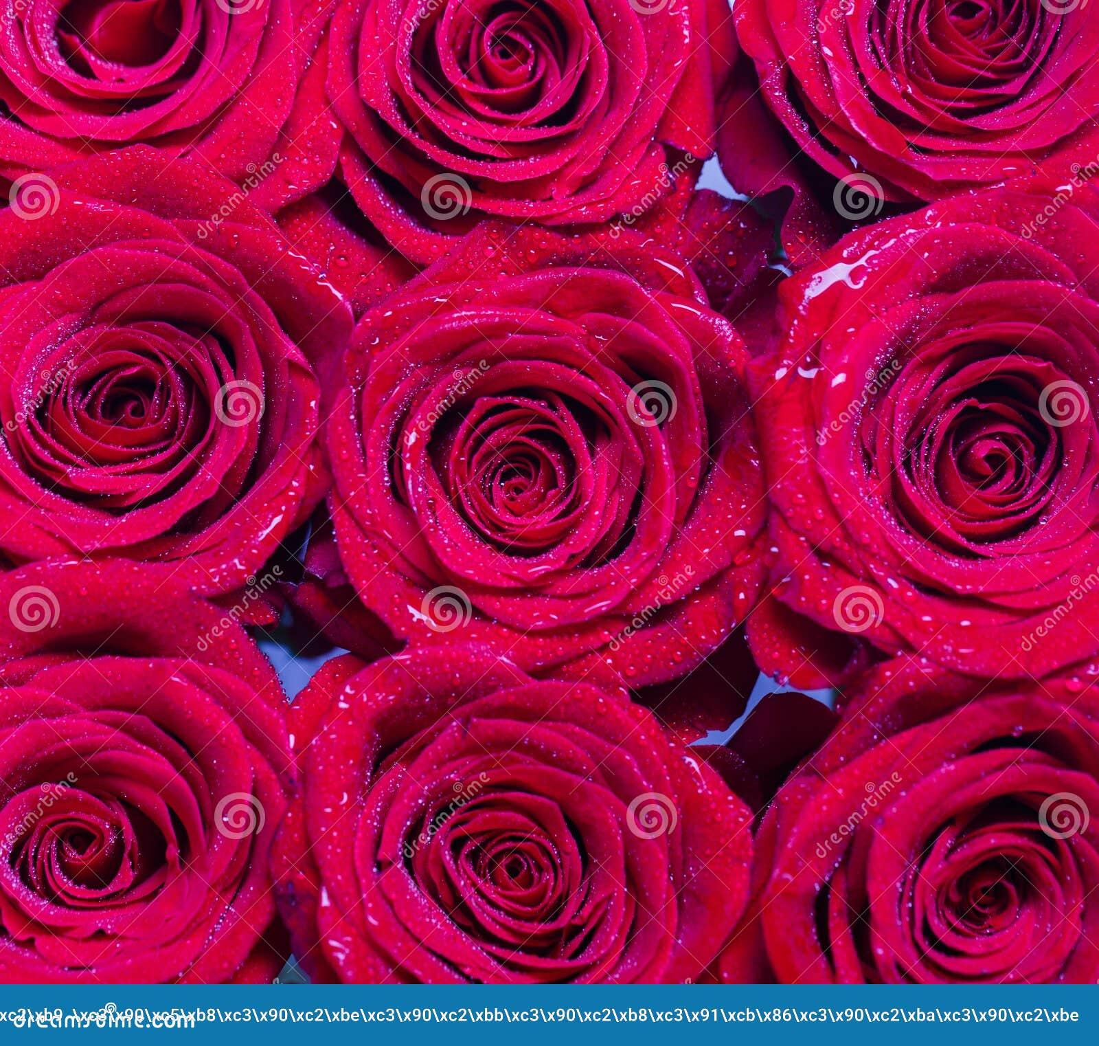Fiore Della Rosa Rossa Petali Mazzo Dei Fiori Rosa Rossa Fresca