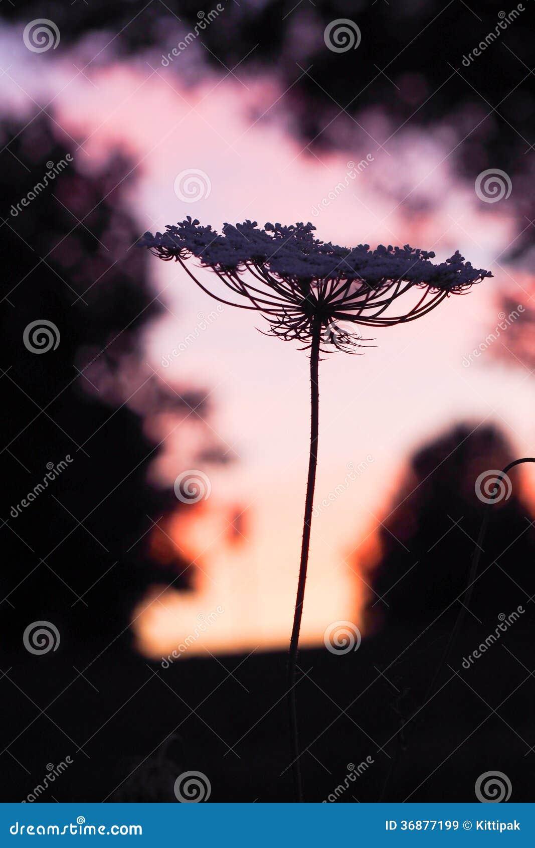Download Fiore della siluetta immagine stock. Immagine di paesaggio - 36877199
