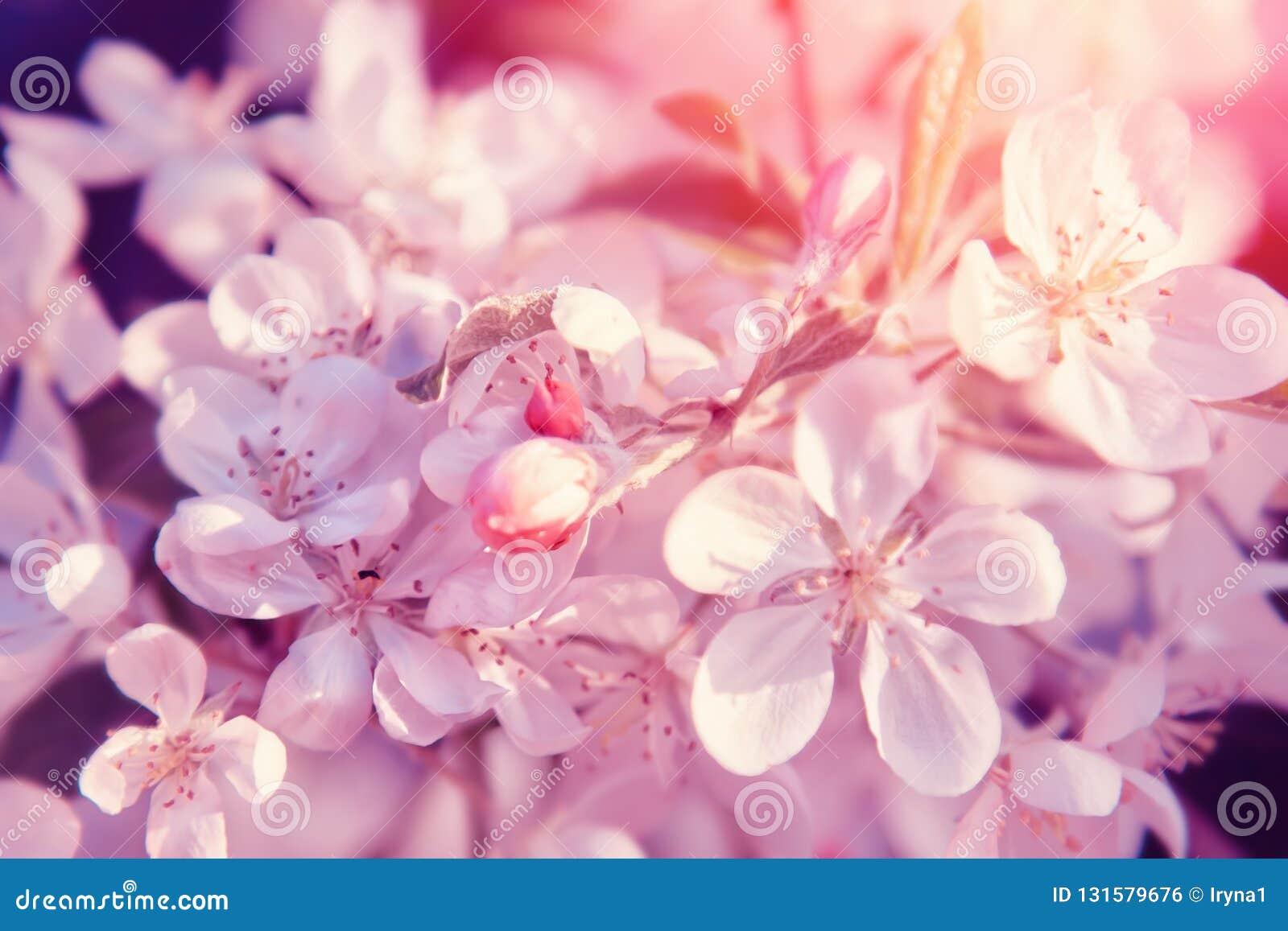 Fiore dentellare dei fiori Bello fondo pastello floreale della natura