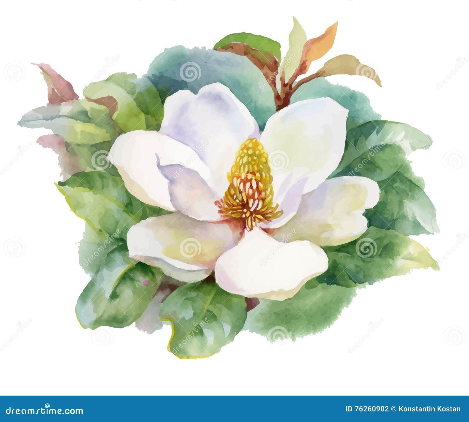 Fiore di fioritura della magnolia di estate dell for Magnolia pianta prezzi