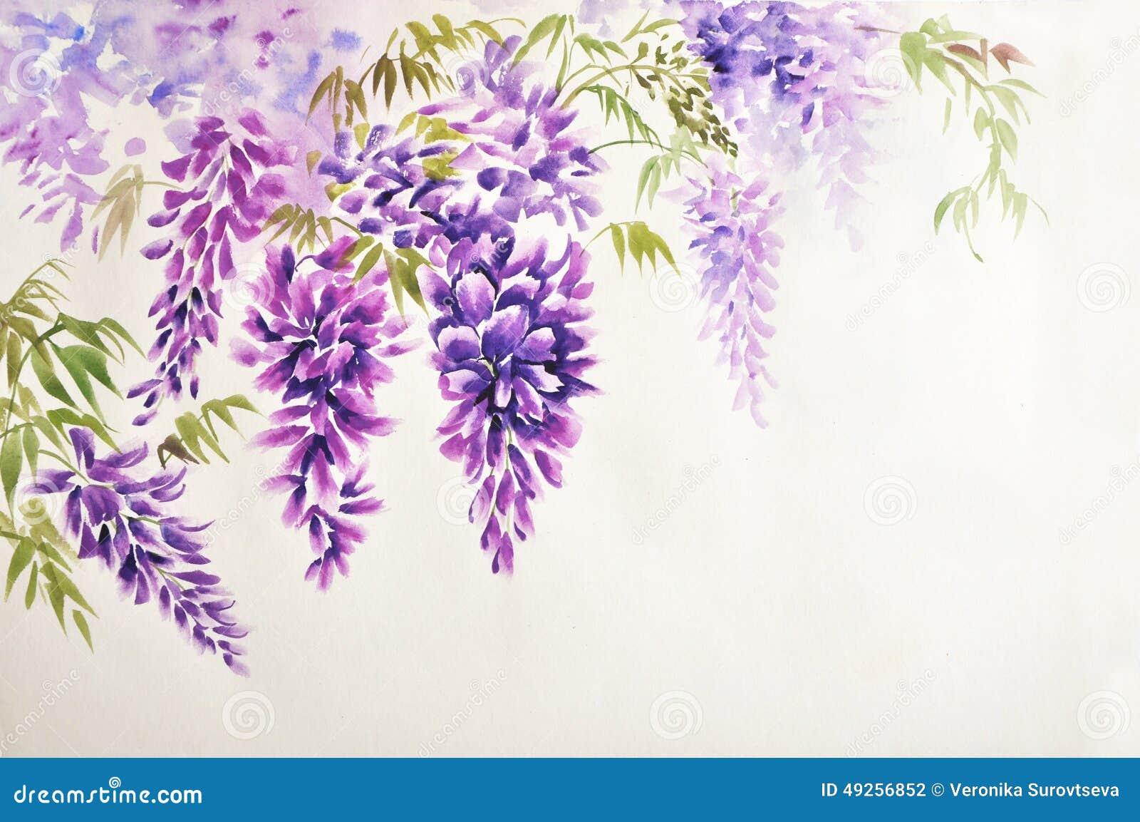 Fiore di glicine illustrazione di stock illustrazione di for Glicine disegno