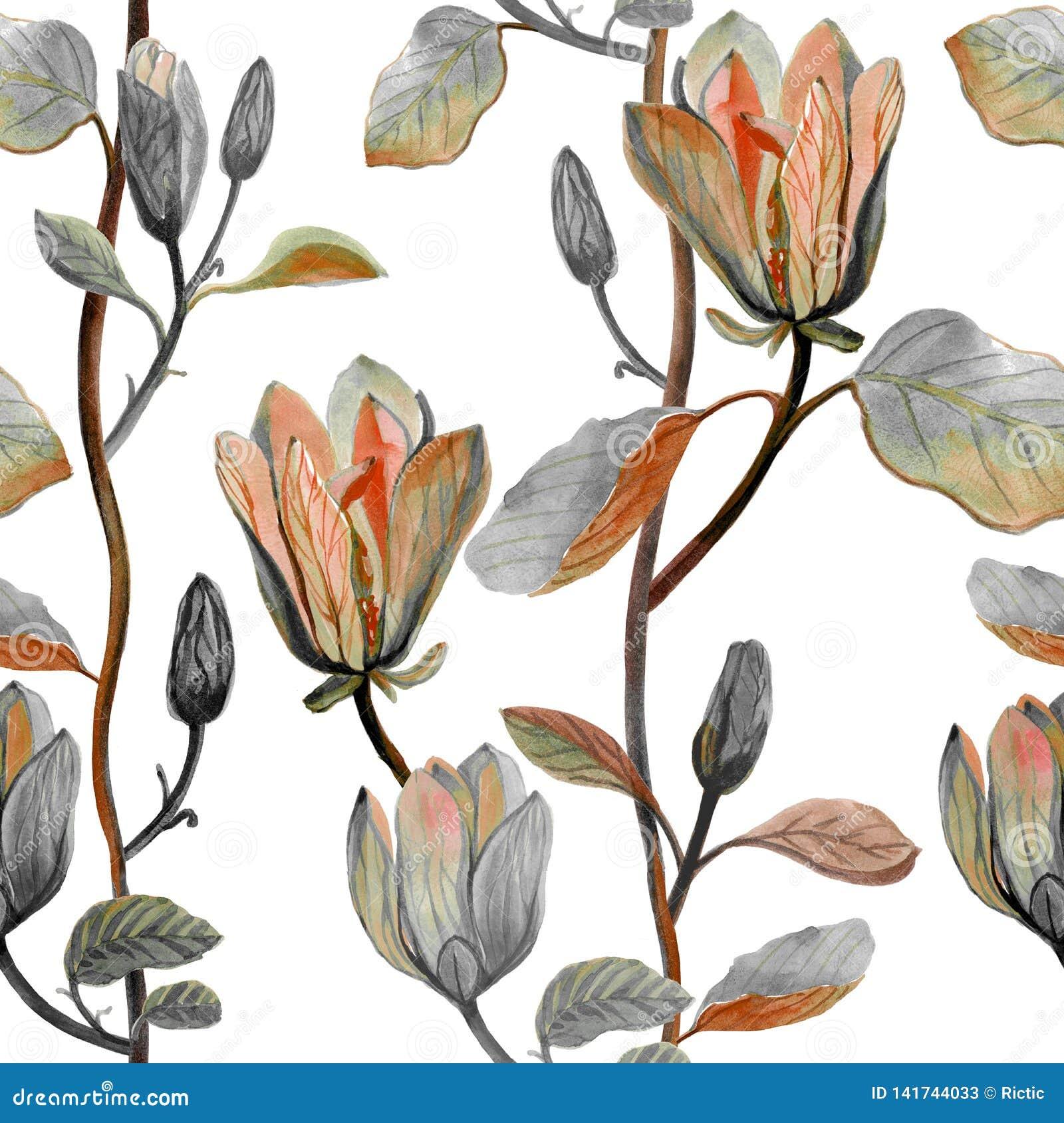 Fiore disegnato a mano della magnolia dell acquerello bello