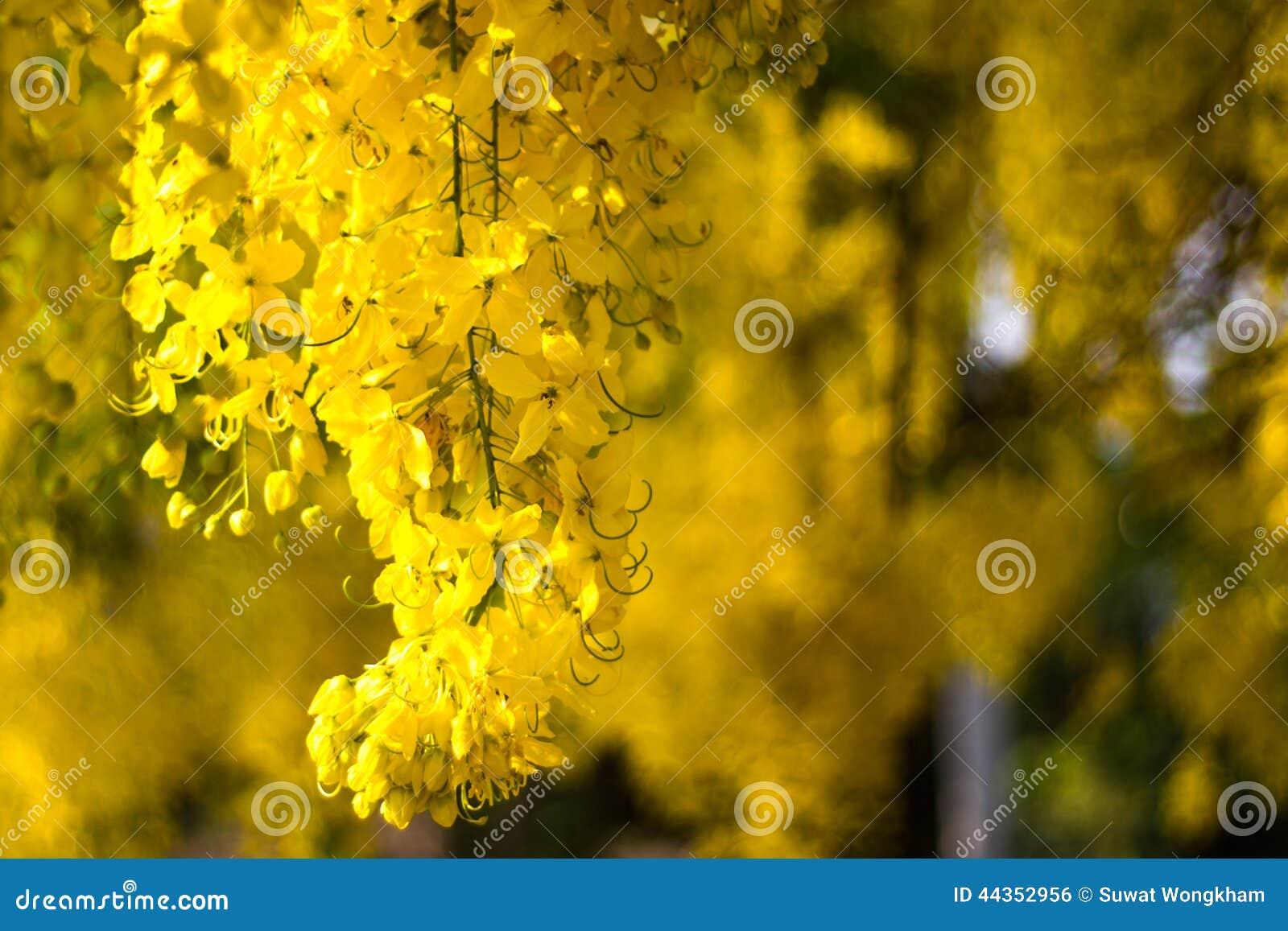 Fiore dorato