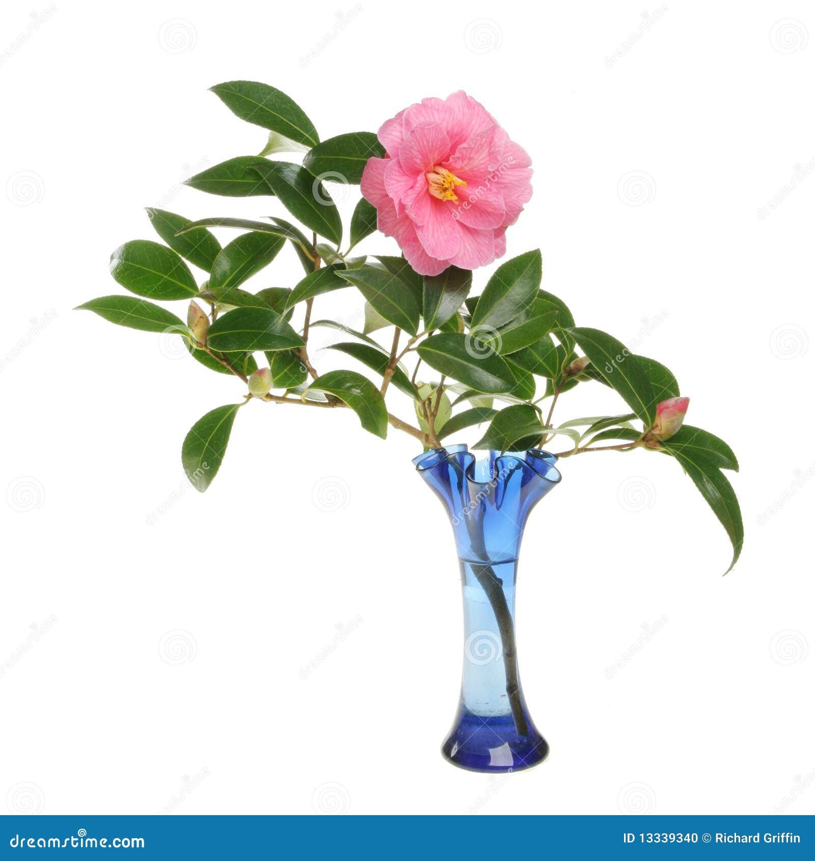 Fiore e germogli della camelia in un vaso di vetro for Camelie in vaso