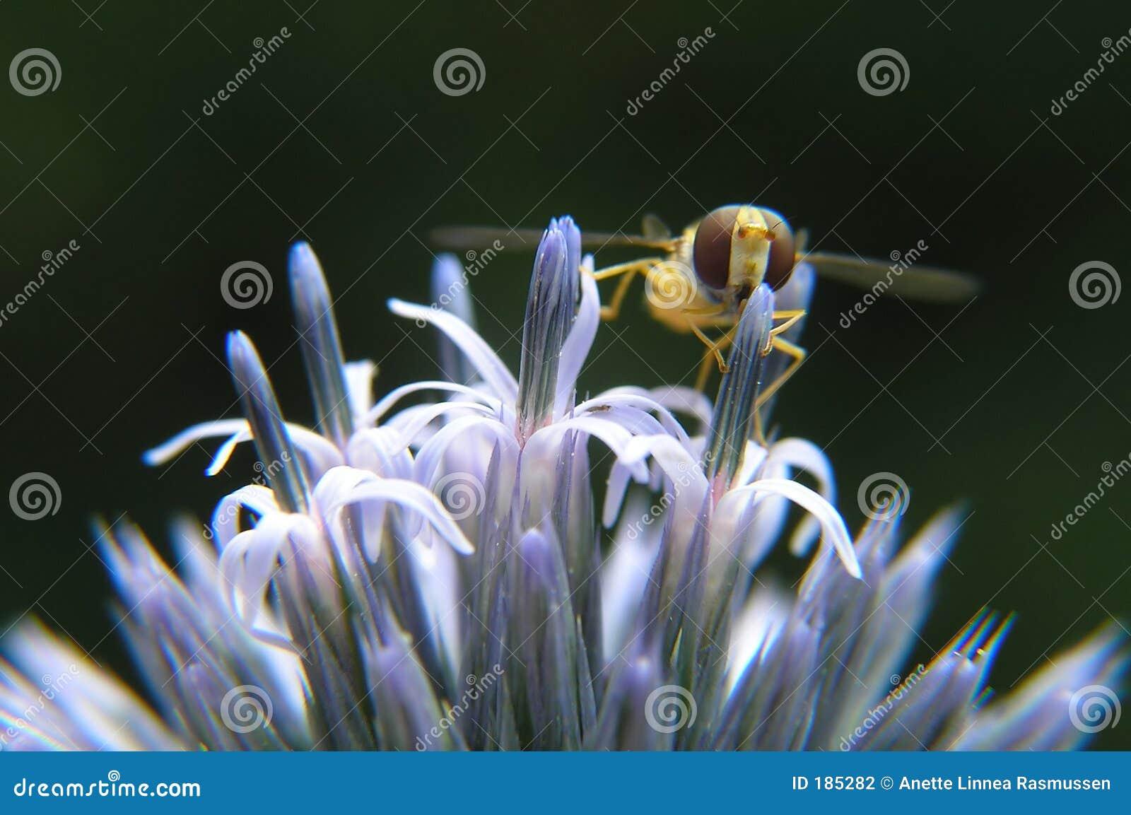 Fiore ed ape