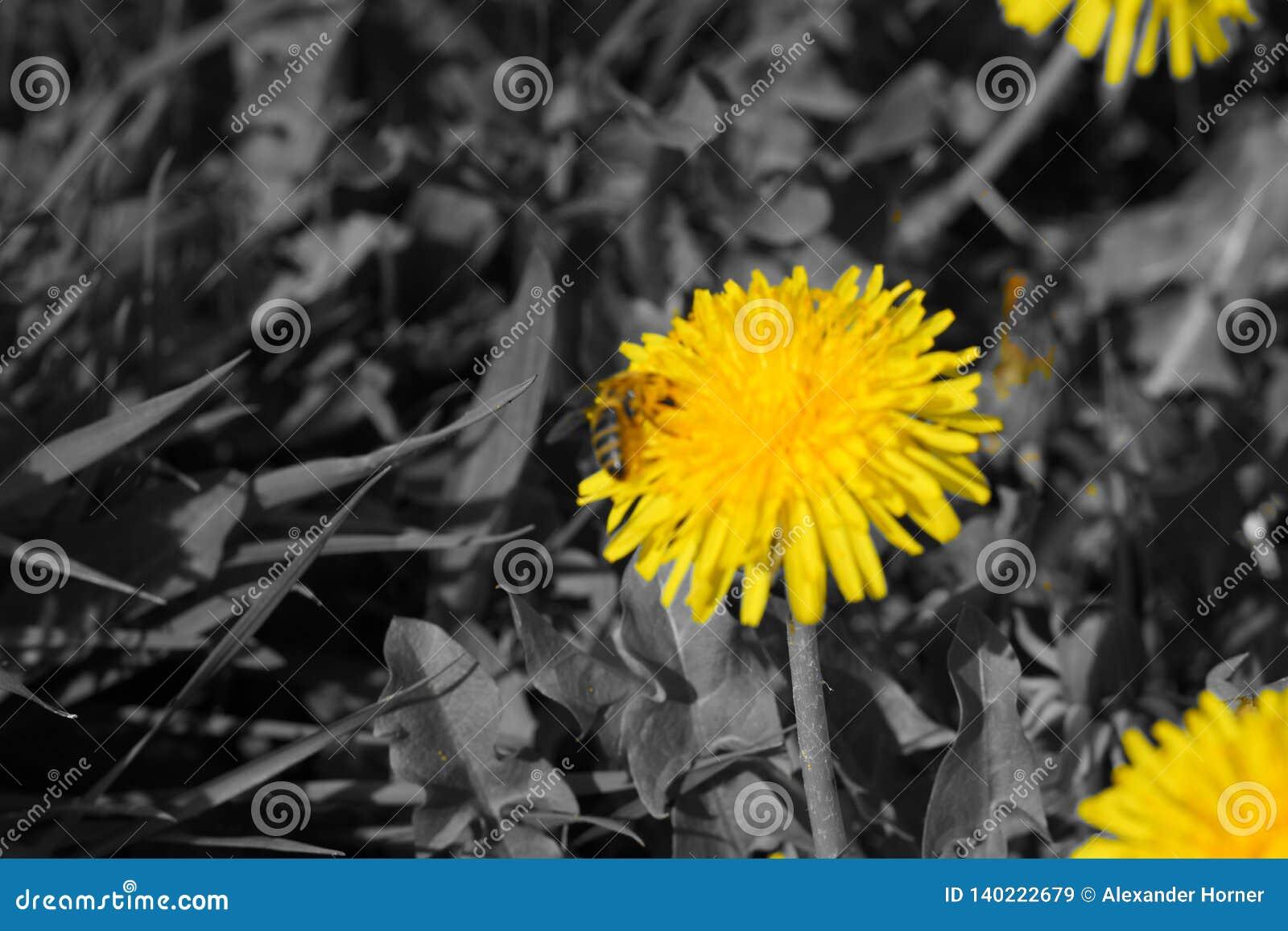Fiore giallo bianco nero sul prato
