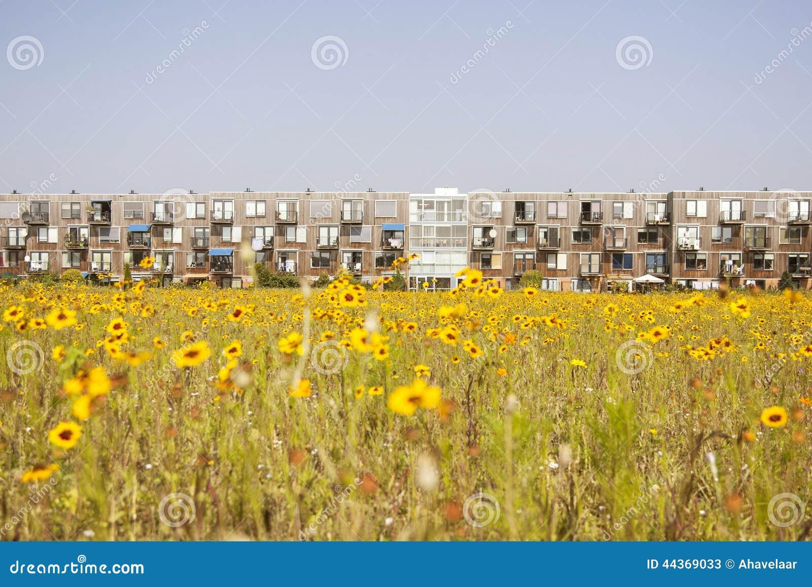 Fiore giallo ed alloggio olandese moderno
