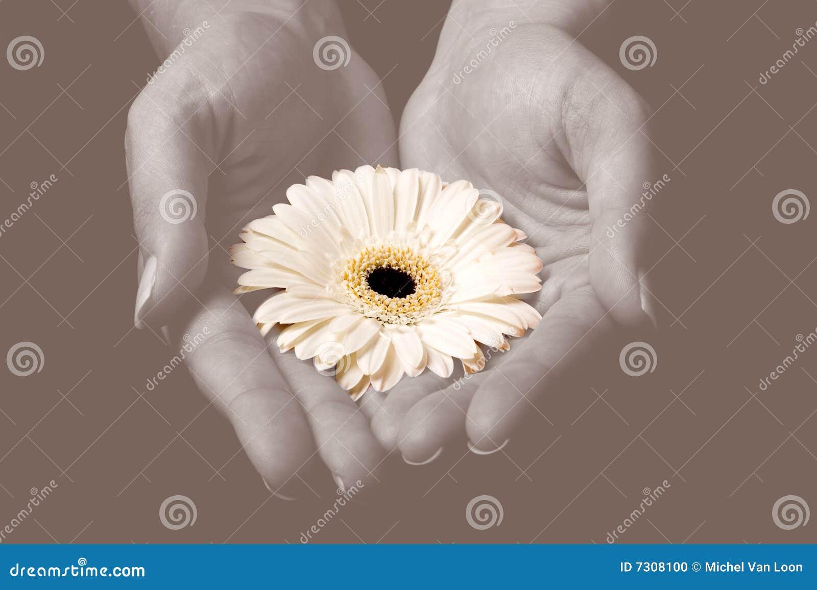 Fiore giallo in mani