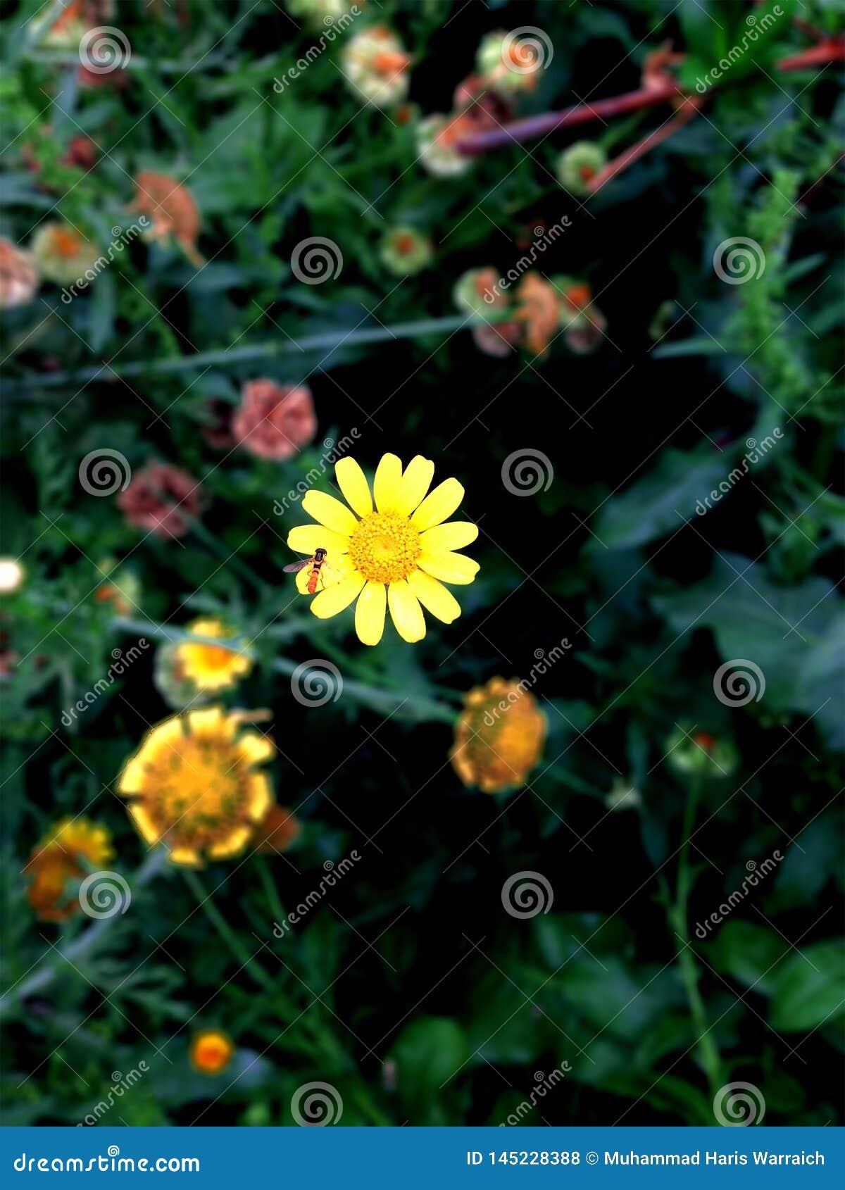 Fiore giallo su fondo nero