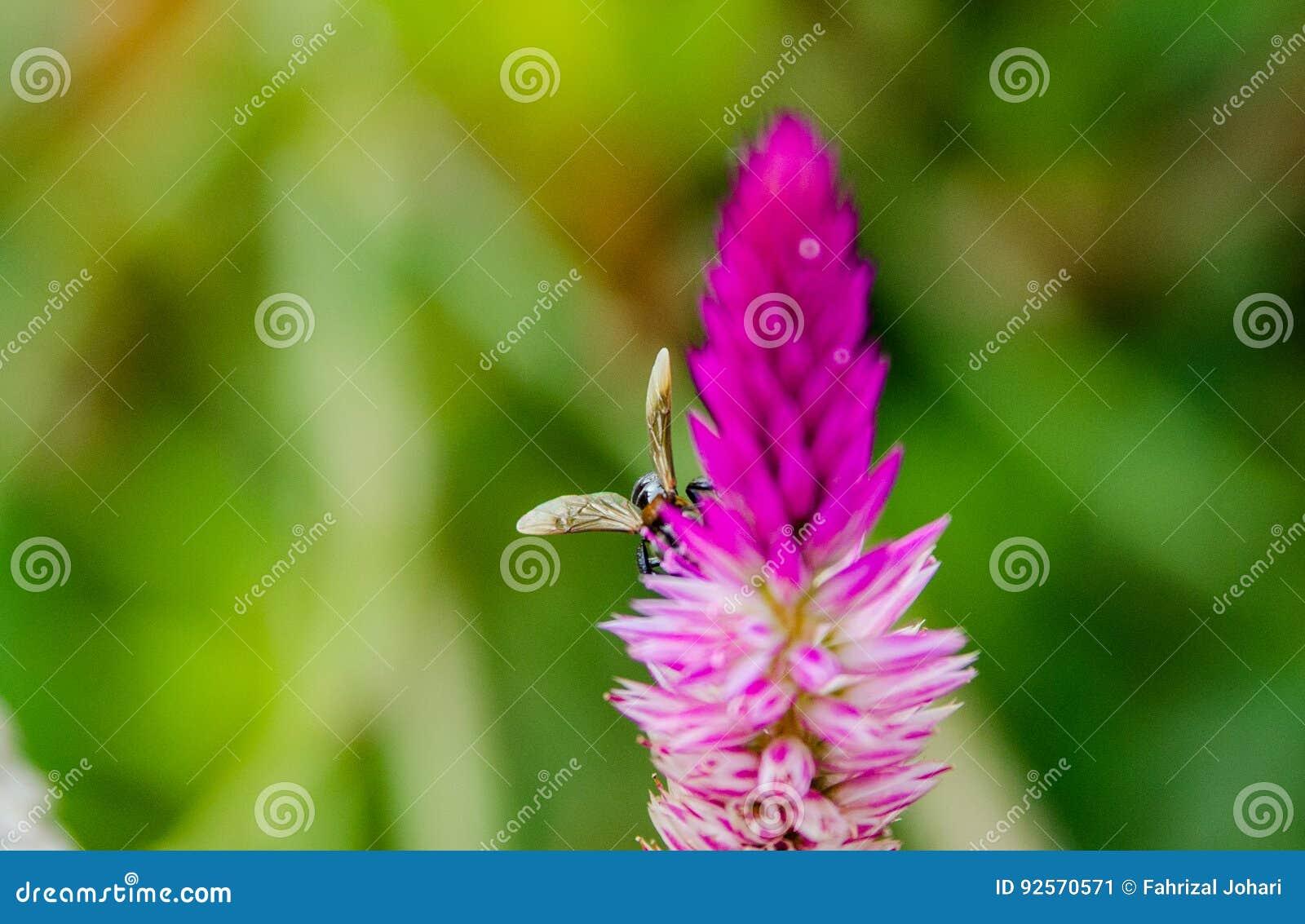 Fiore & insetto