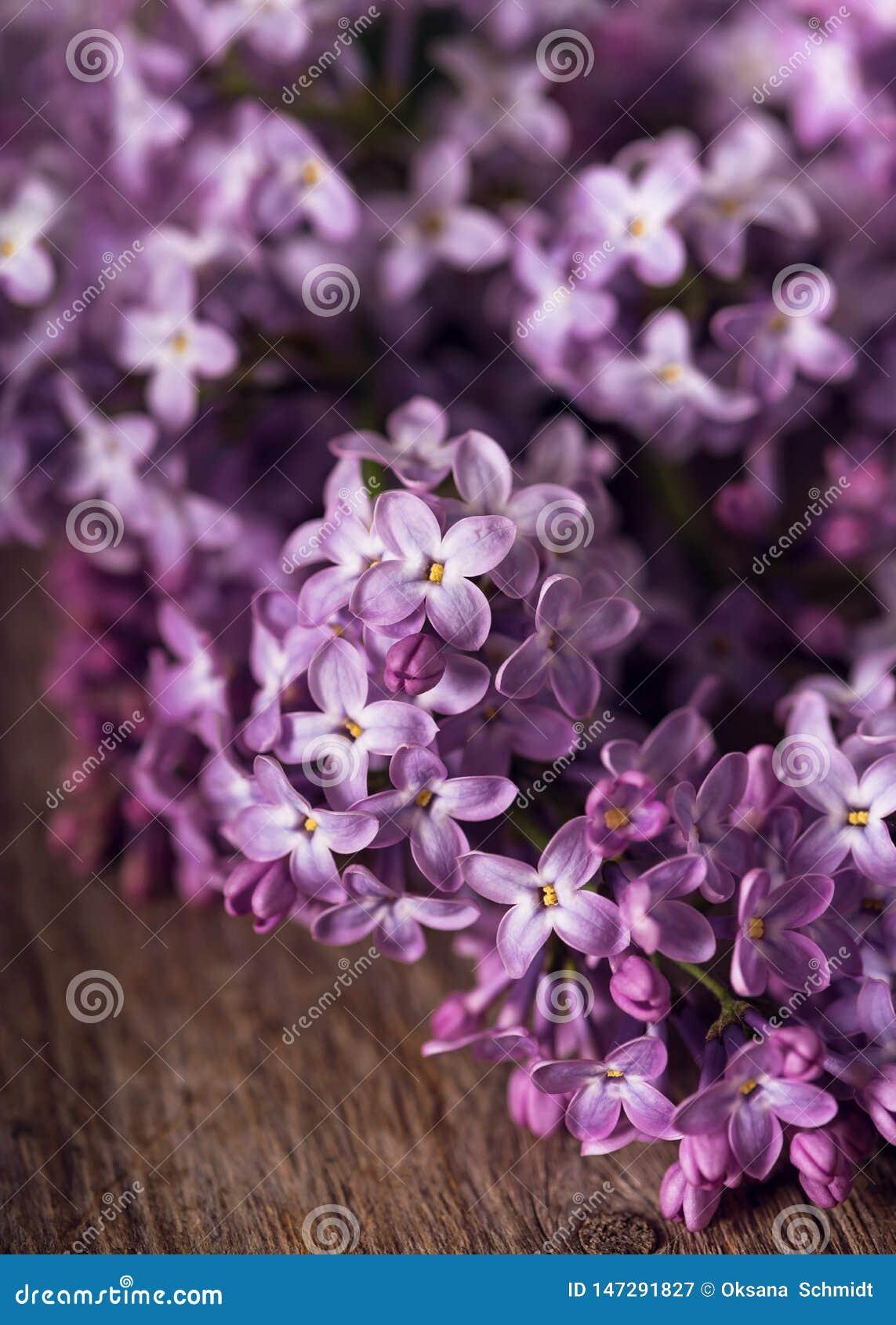 Fiore lilla porpora su fondo di legno rustico