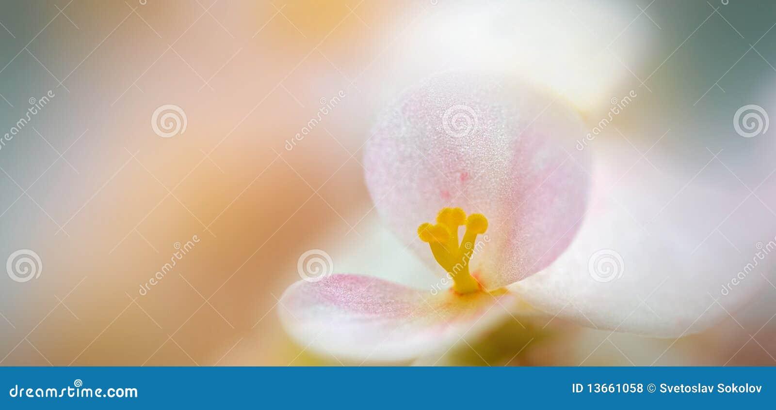 Fiore a macroistruzione